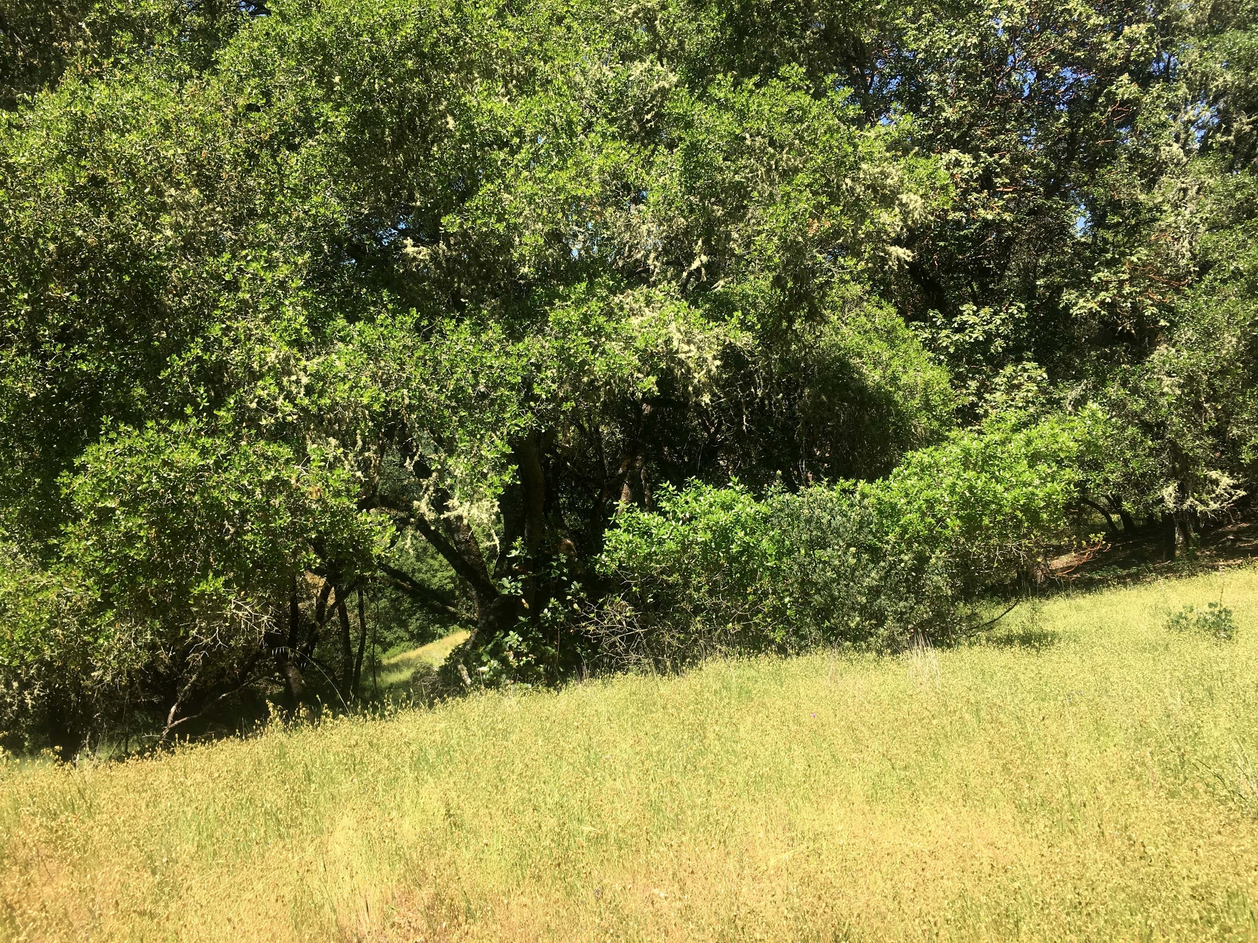 Contrasting forest and meadow on 40ac parcel in Mendocino County near Hopland and Yorkville.