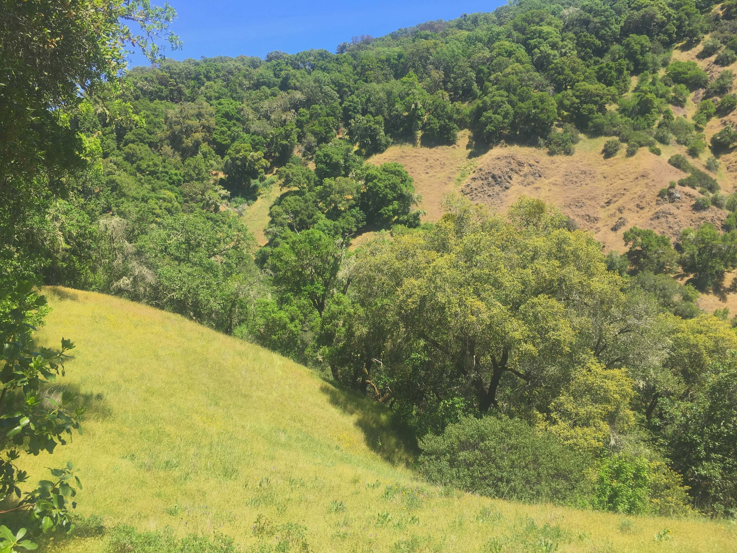 Beauty abounds on 40ac ranch near Hopland and Anderson Valley, California.