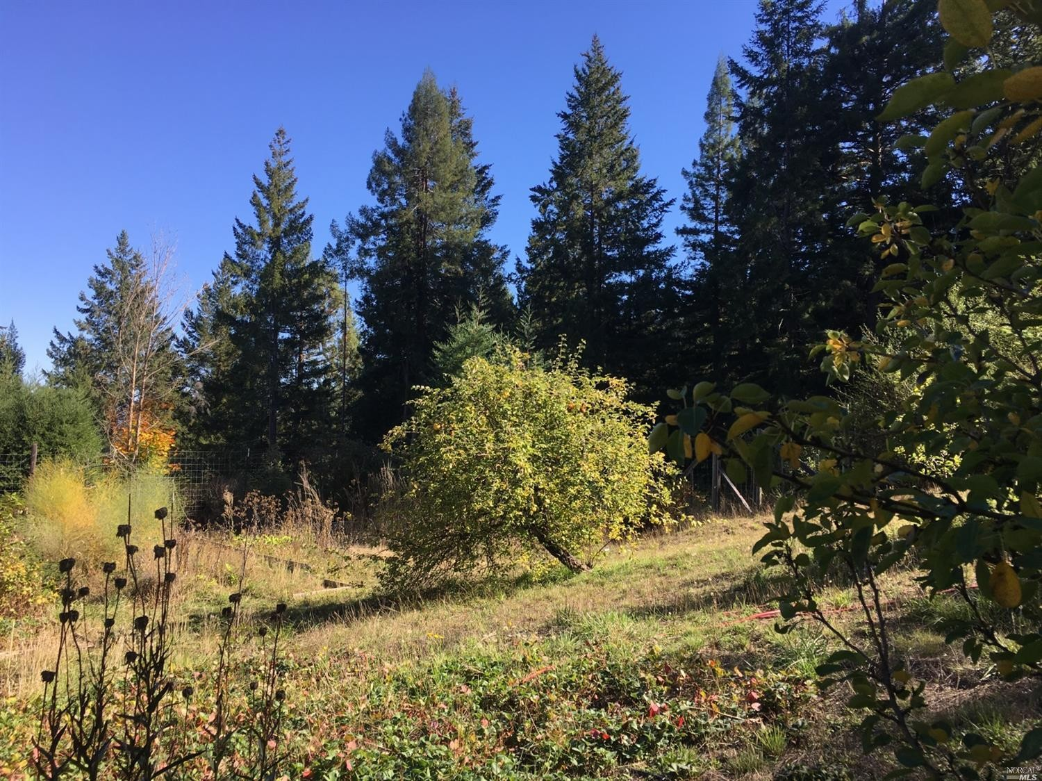 sun and space for a garden at the family home for sale, Philo, CA