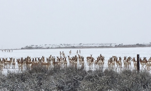 Antelope on the way to Alturas.