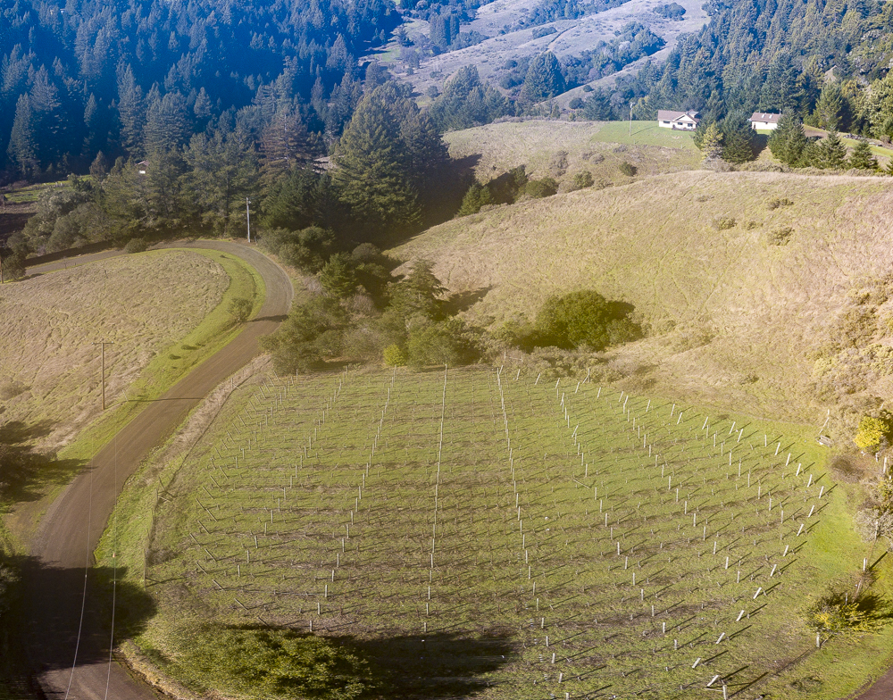Award winning one acre vineyard in the Pinot Noir country of Anderson Valley