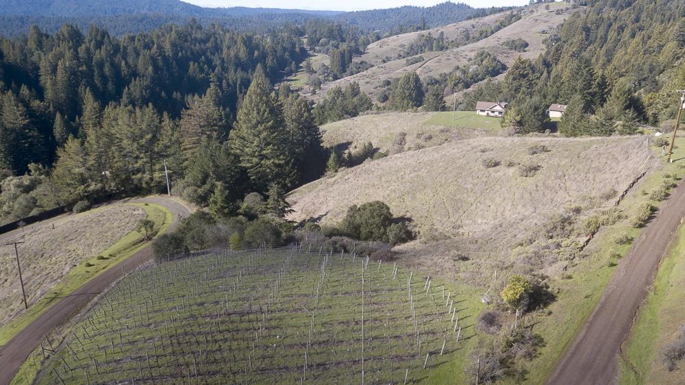 Vineyard and hills beyond.