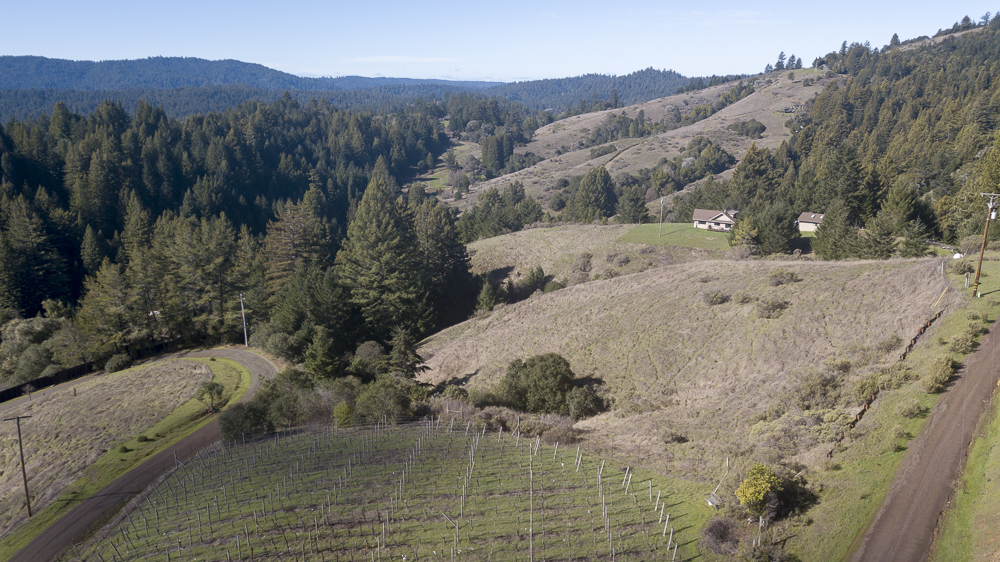 The vineyard and beyond in beautiful Anderson Valley, Philo, CA.