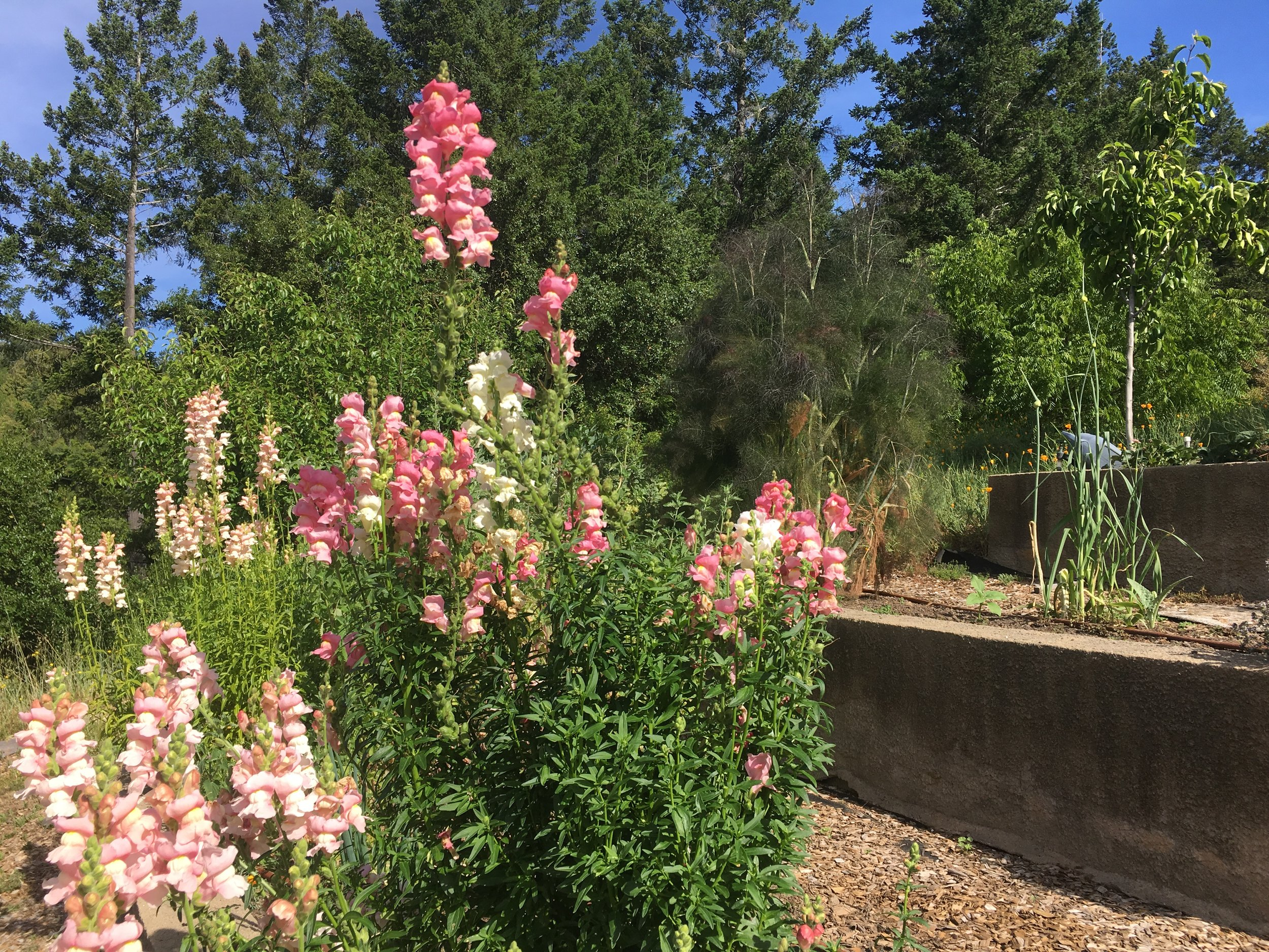 Flowers in the yard of a home for sale in Philo CA
