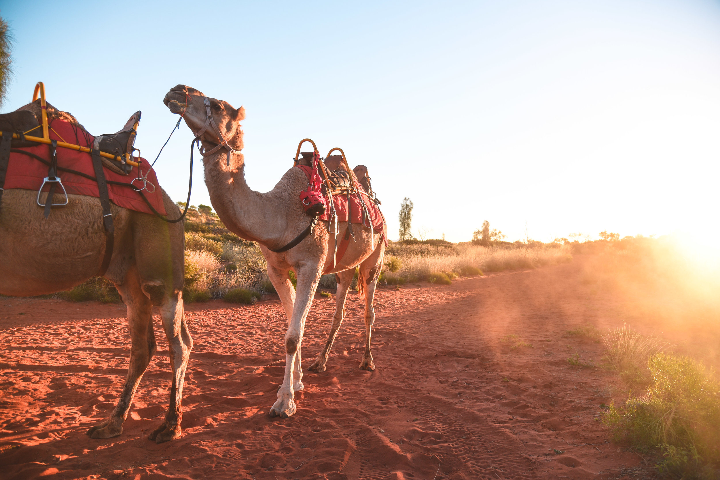 Riding camels in the Outback was an experience like no other!