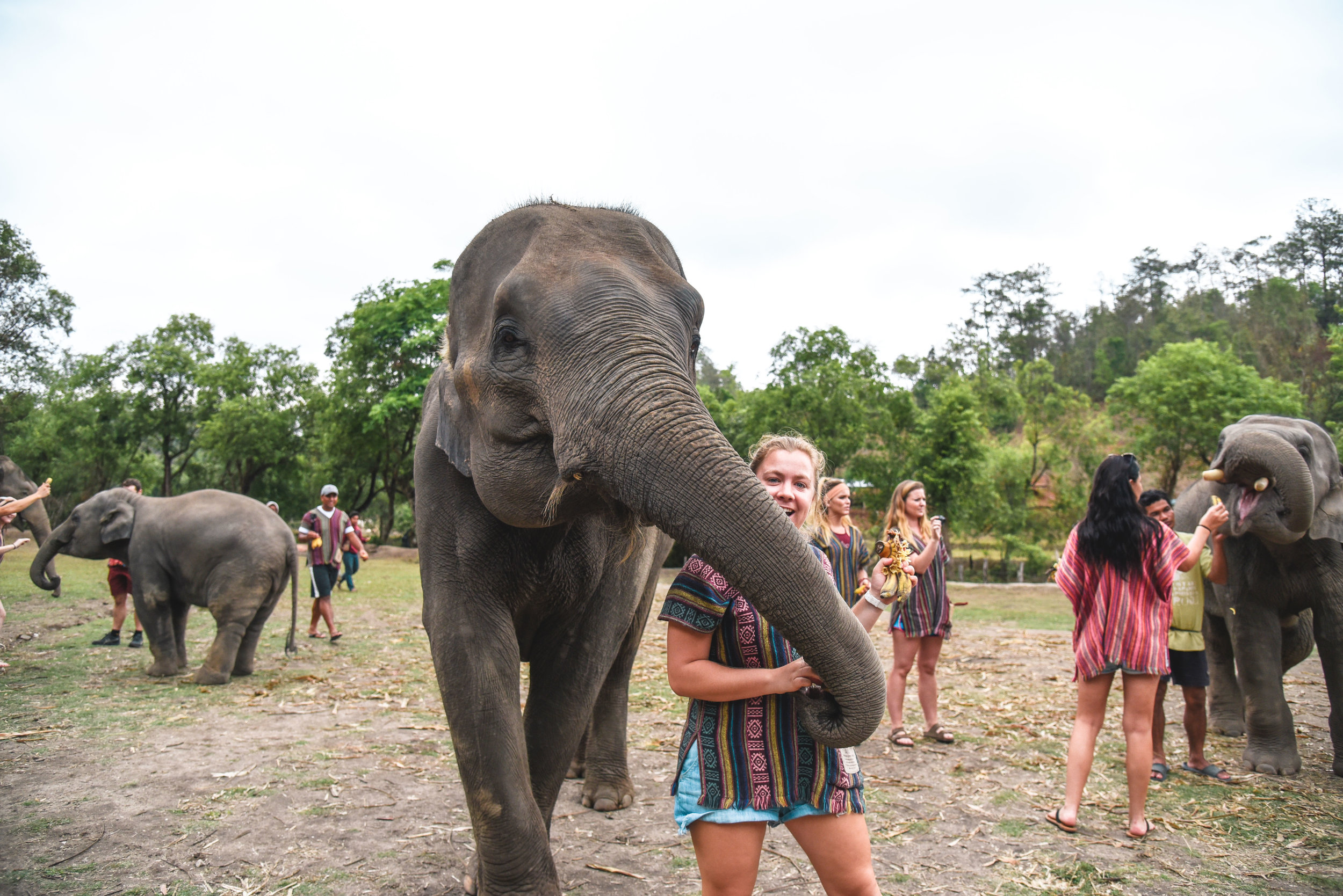 Play with elephants in Chiang, Mai, Thailand