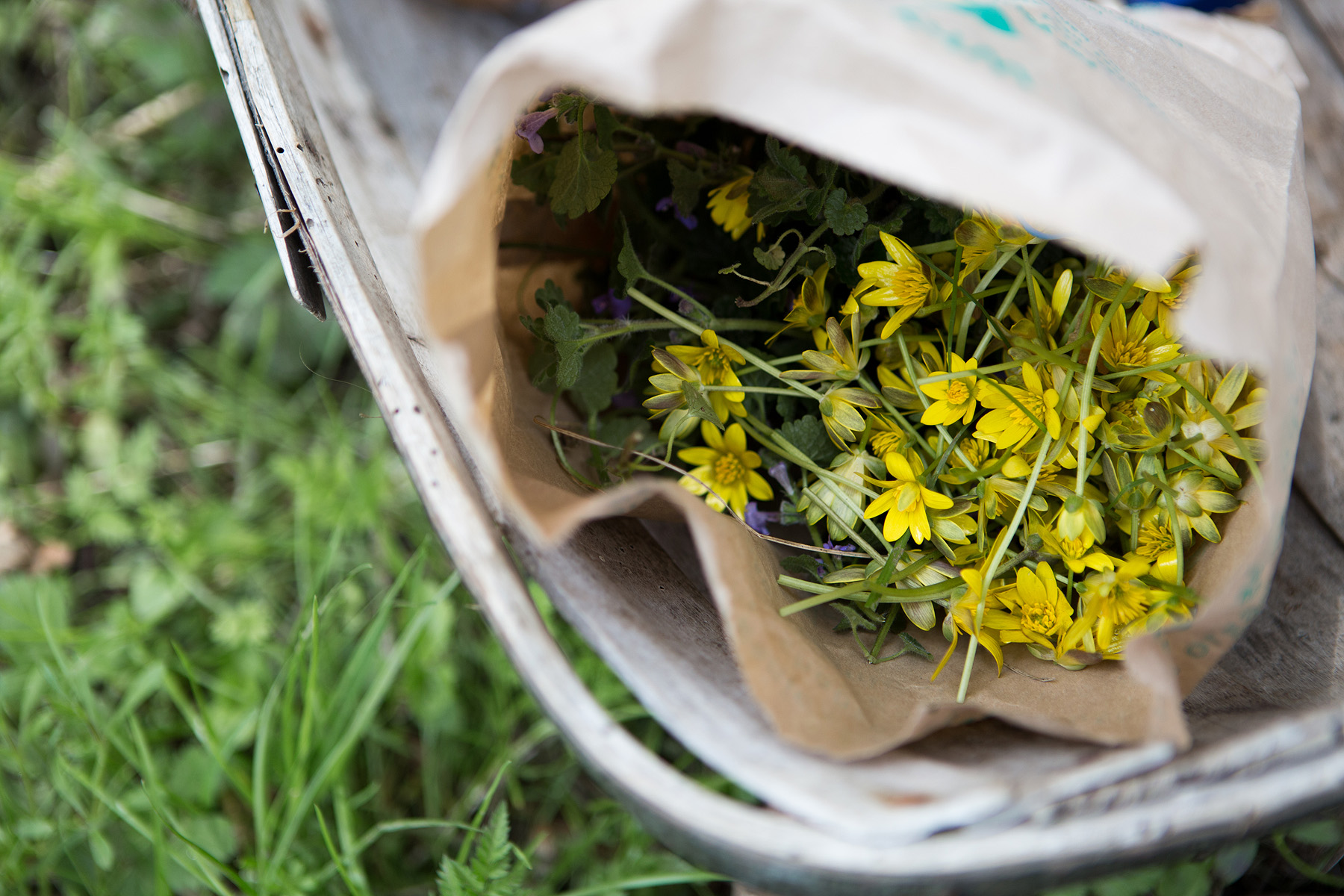 Daylesford_Celandine in a bag.jpg