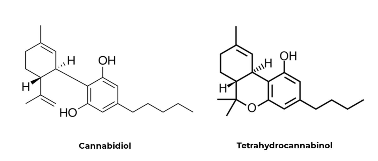 Illustration from  https://medium.com/cbd-origin/cbd-vs-thc-the-difference-explained-b3cfc1da52f0