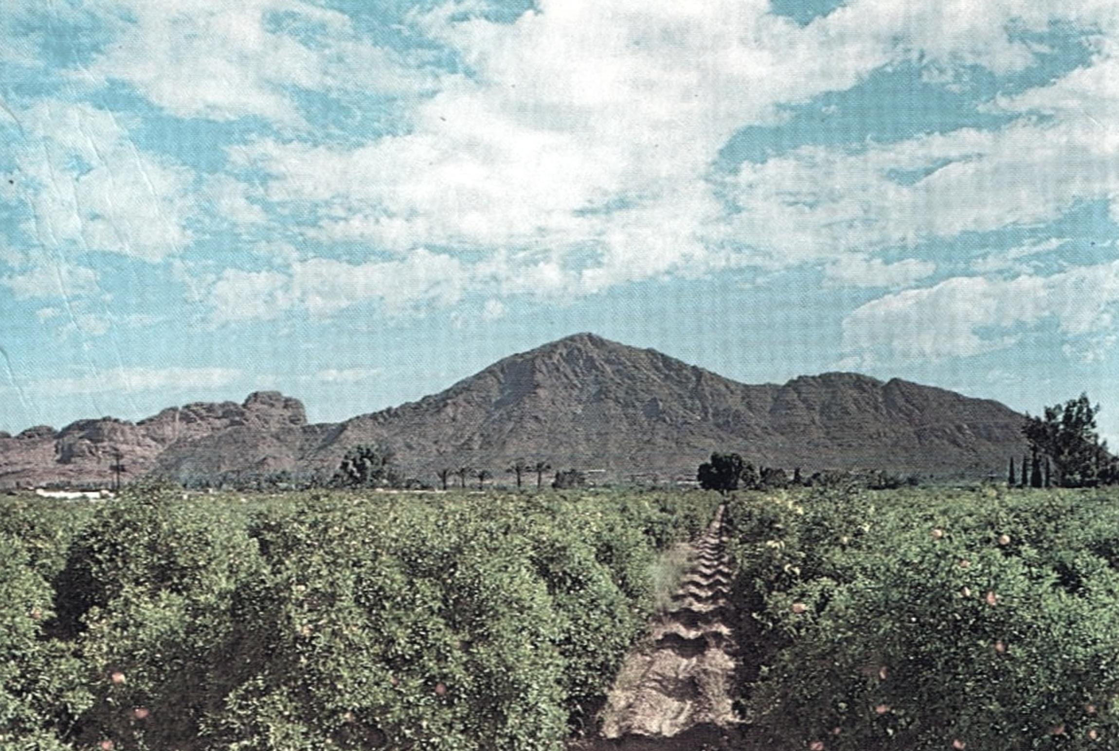 camelback+mountain+orange+groves+1950s.jpg