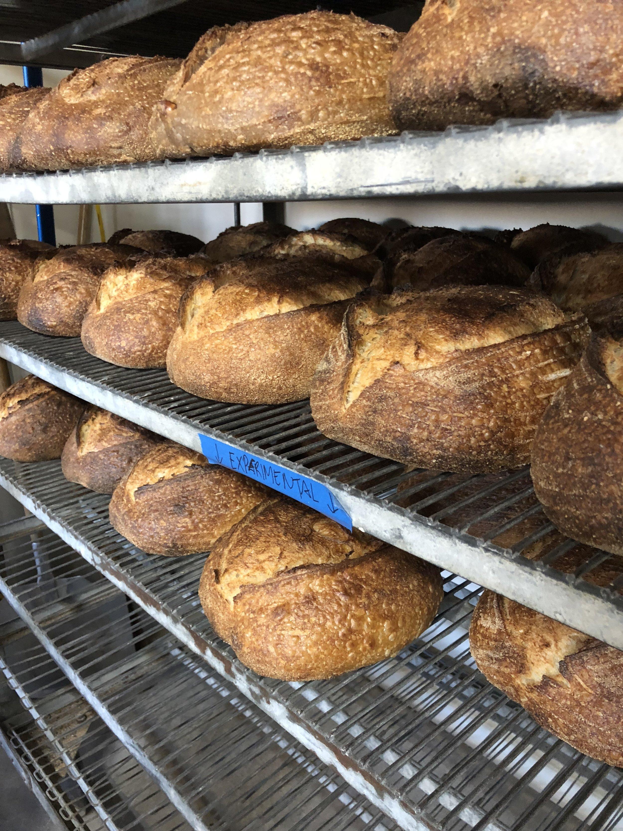 proof bread.jpeg