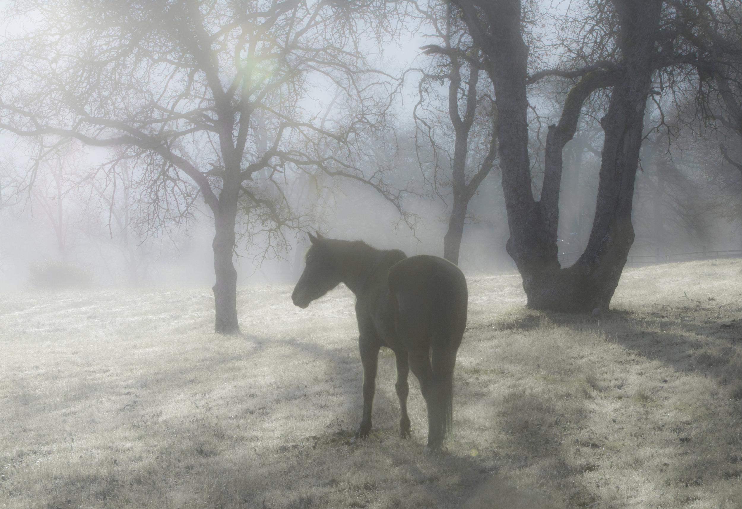 2018(01)January_Sequoia_AChanceEncounter_Black_Final.jpg