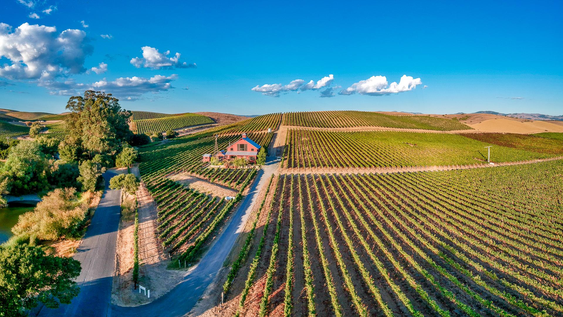 Los Carneros Vineyard view in late summer