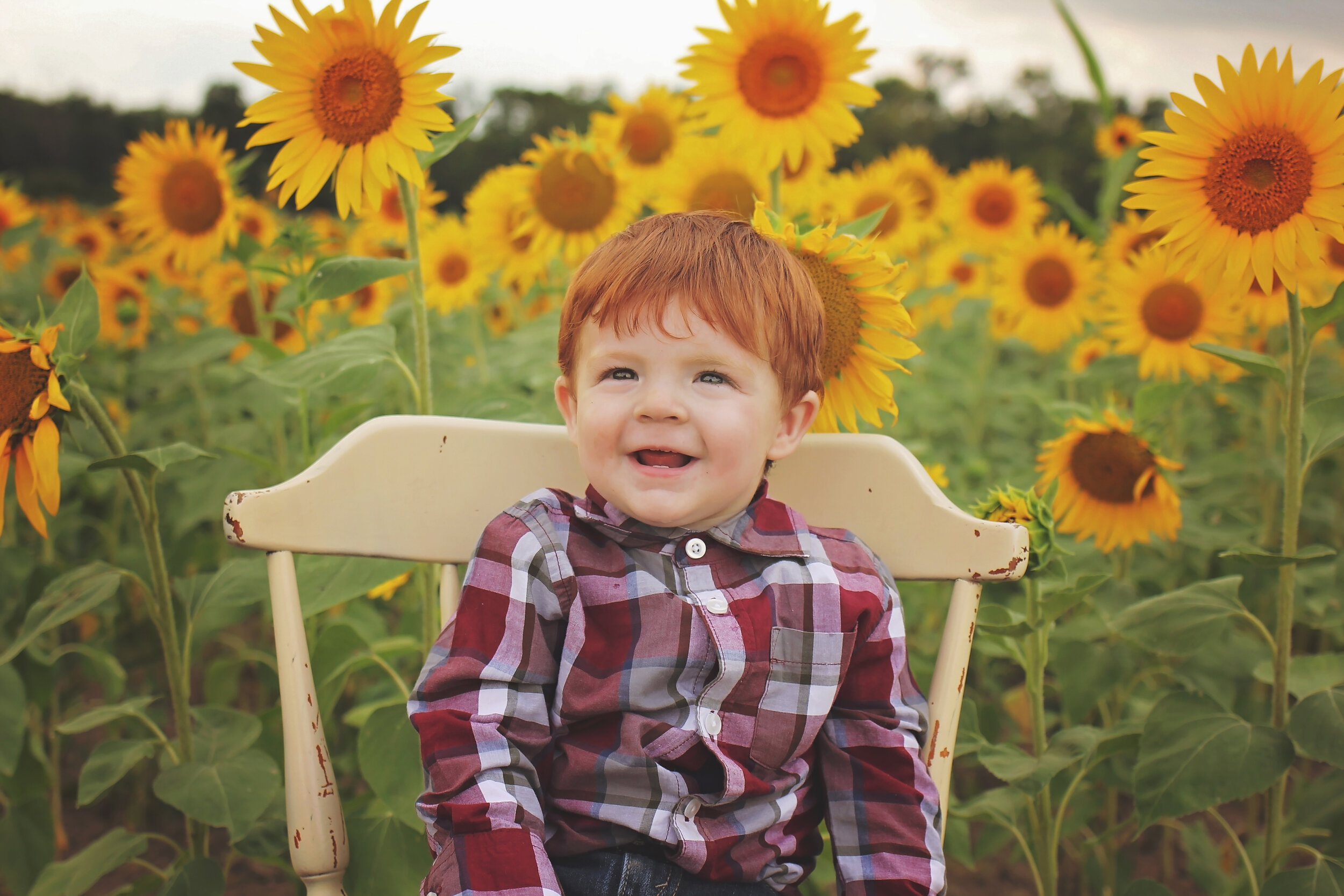 southern-illinois-photographer-benton-sunflower-field-toddler-boy.jpg