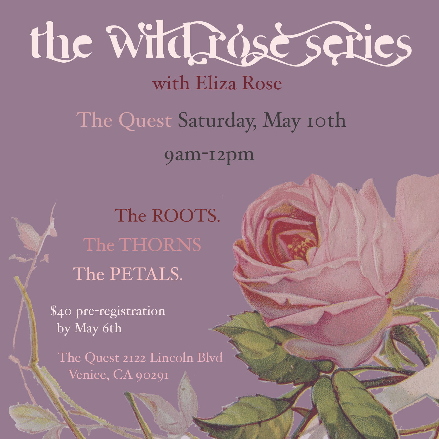 the wild rose series.jpg