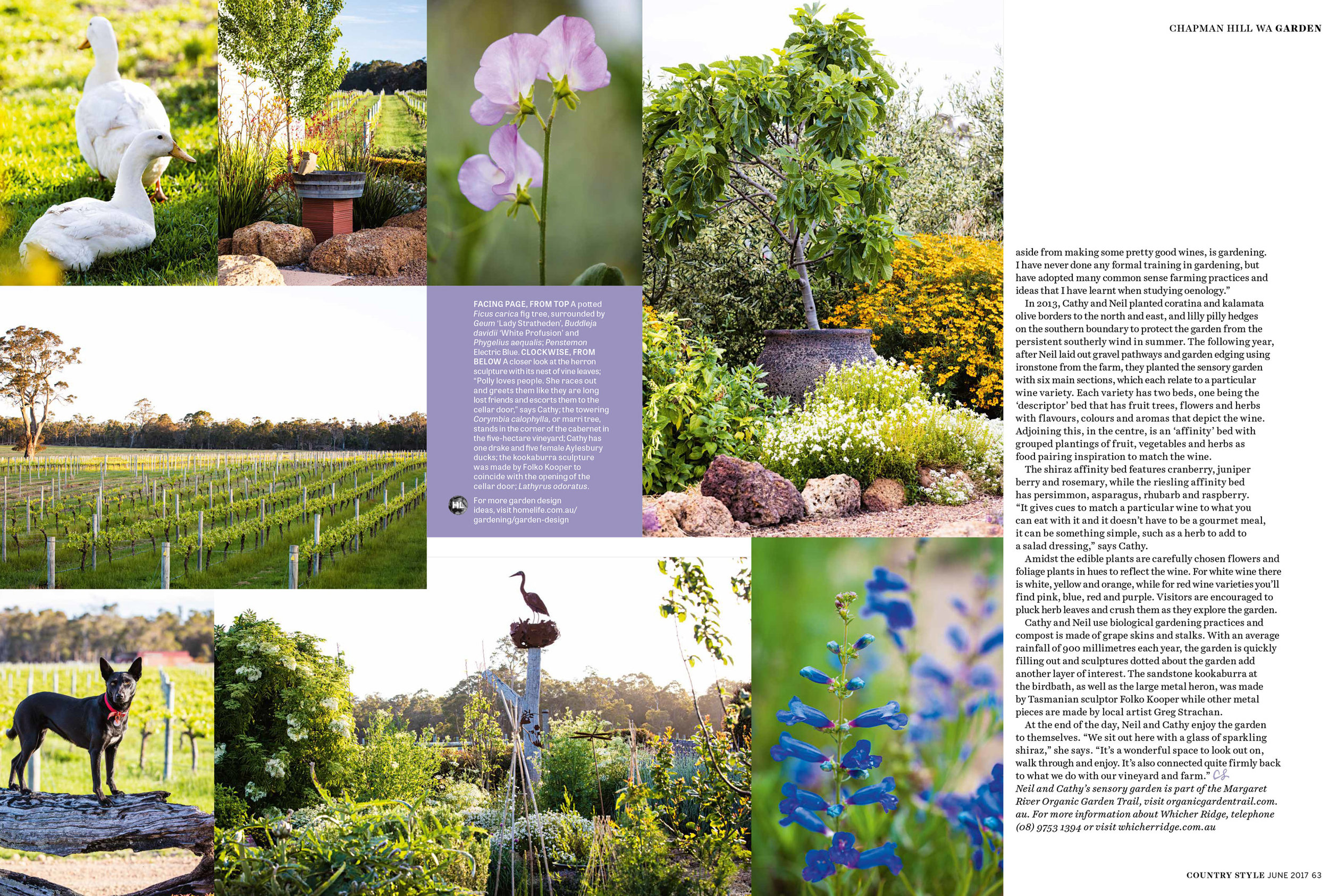 australian+country+style+june+2017+Cathy+Howard+Garden+by+claire+mactaggart+3.jpg