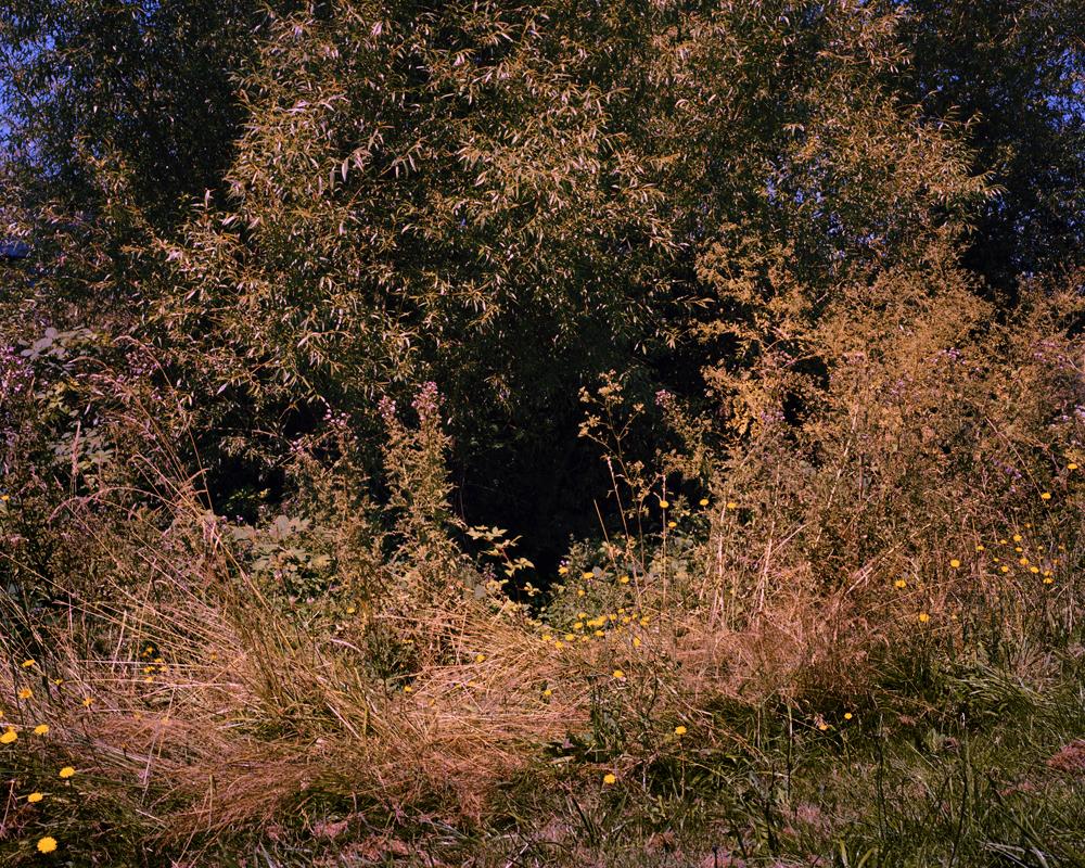 grassy-hole-book2_RGB.jpg
