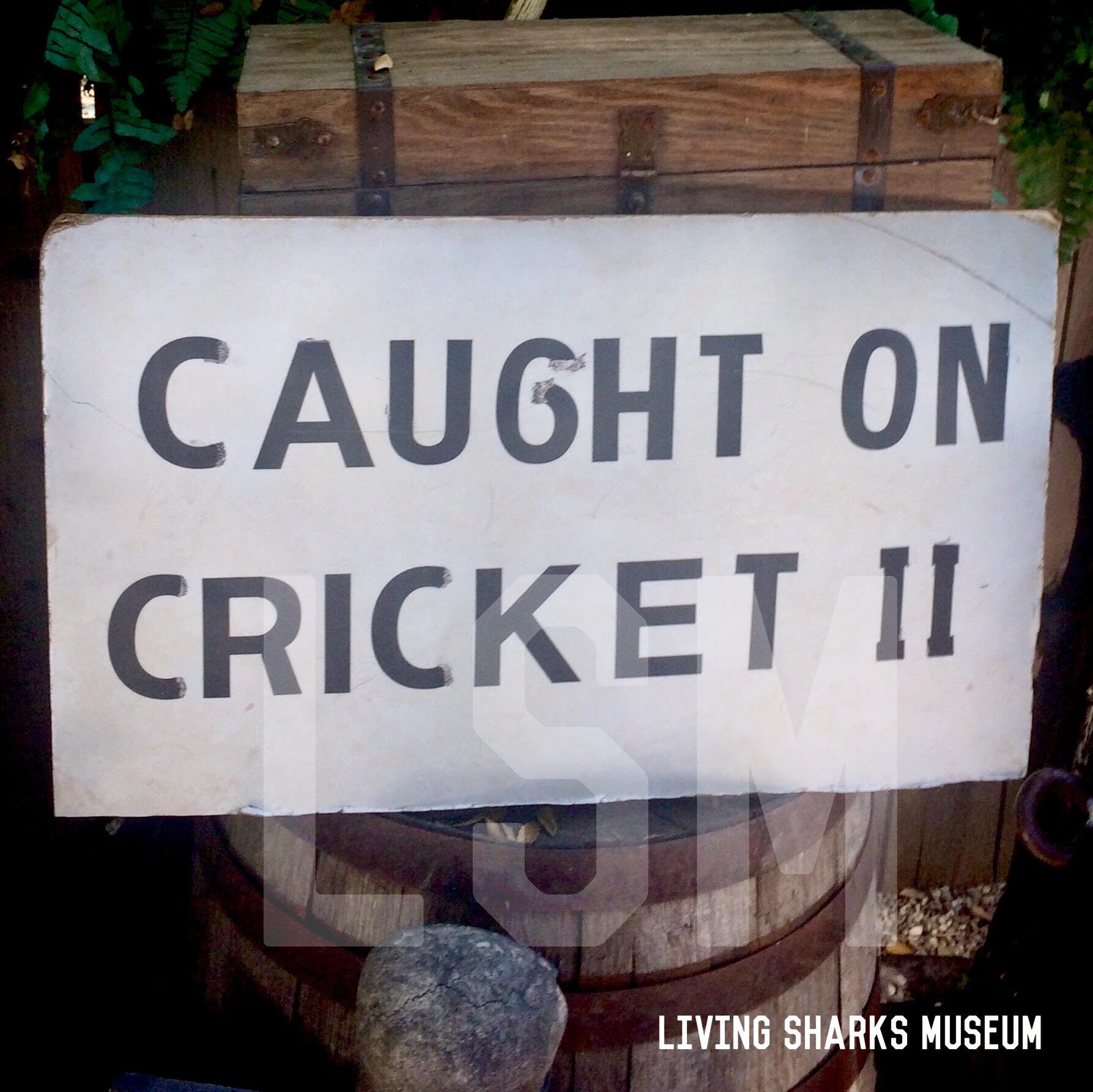 CRICKET II SIGN - As seen in legendary photos of some of Frank Mundus' earliest record catches, this is his personal sign that would accompany many publicity events. Most famously this sign can be seen along with the 3,000 pound Great White Shark caught on June 1, 1960 off Amagansett, depicted in Mundus' autobiography Fifty Years A Hooker._____________________CAUGHT ON CRICKET II PUBLICITY SIGNFROM FRANK MUNDUS PERSONAL COLLECTIONAcquired by Chris Kiszka, First Mate aboard Cricket IIPrivate Collection - Keith M. Cowley