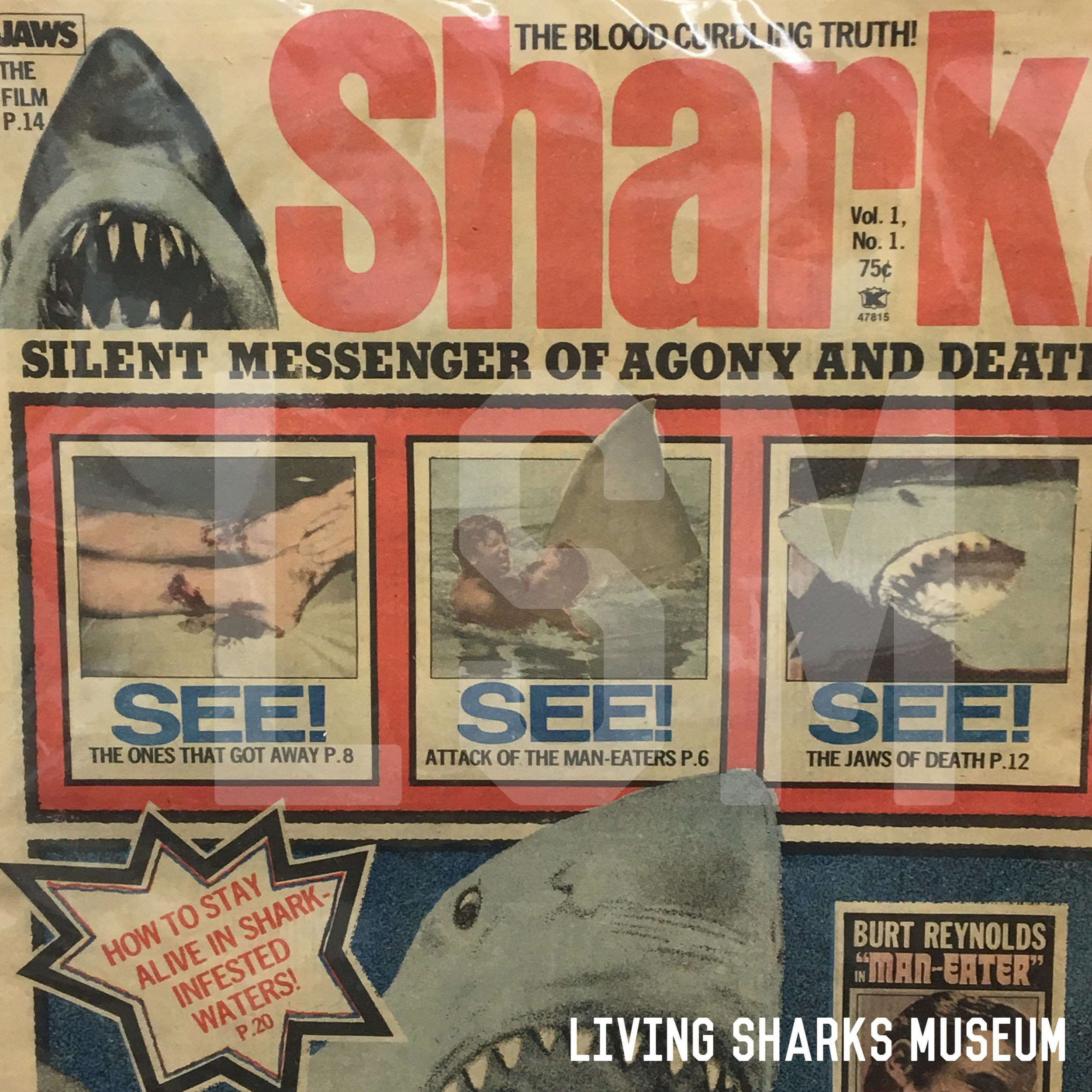 """SHARKSPLOITATION - Once Jaws hit the big screen, endless souvenirs were made depicting the man-eating shark. Few actual photographs existed since at the time (1970-1976) only Ron & Valerie Taylor had published underwater photos of Great Whites from (and outside of) the new """"shark cage"""". Note the menacing """"open jaws"""" in every photo.__________________SHARK EXPLOITATION MAGAZINES (1975-77)RARE OFFICIAL JAWS FILM MAGAZINES (1975)Iconic Photo by Ron & Valerie TaylorPrivate Collection - Keith M. Cowley"""