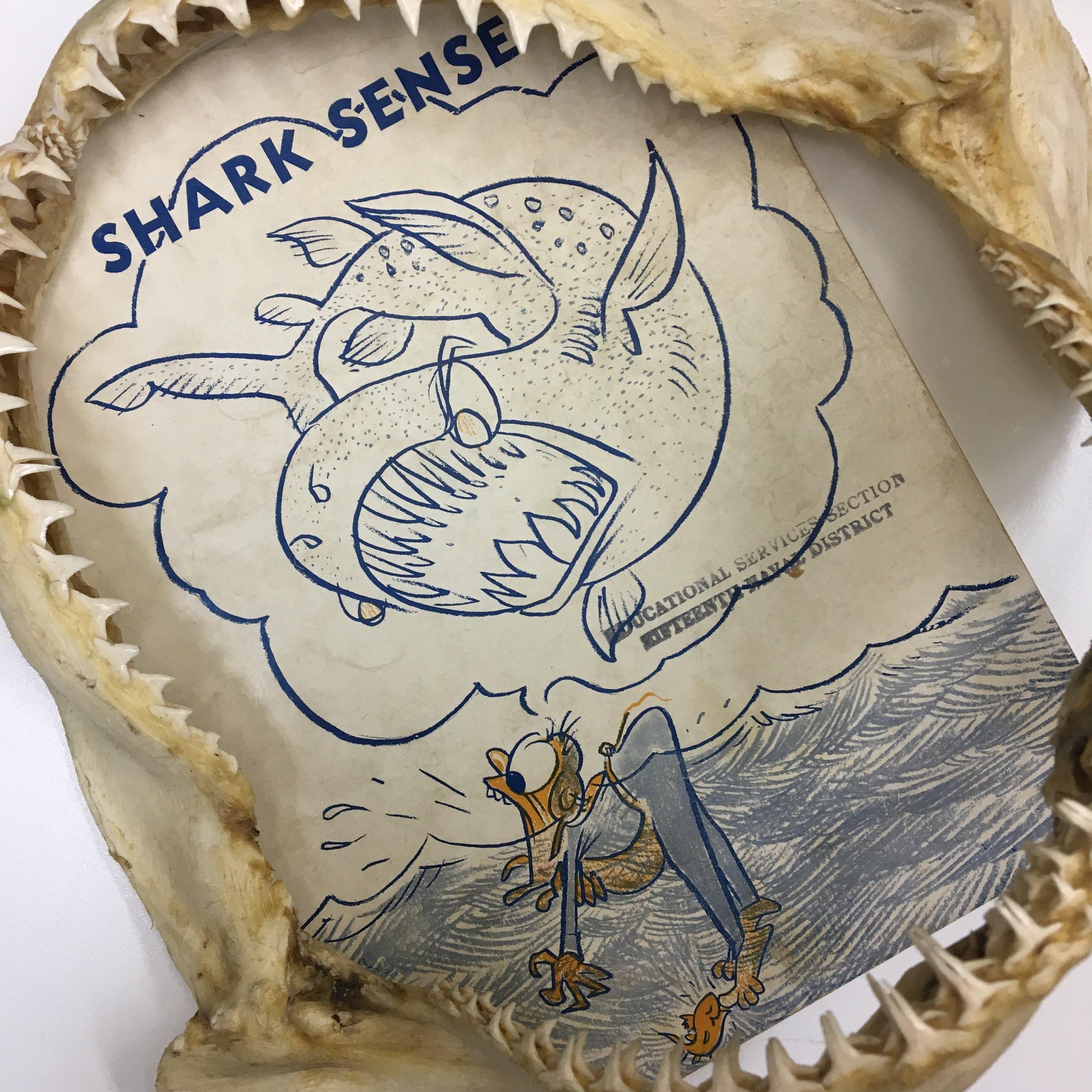 LSM-sharksense