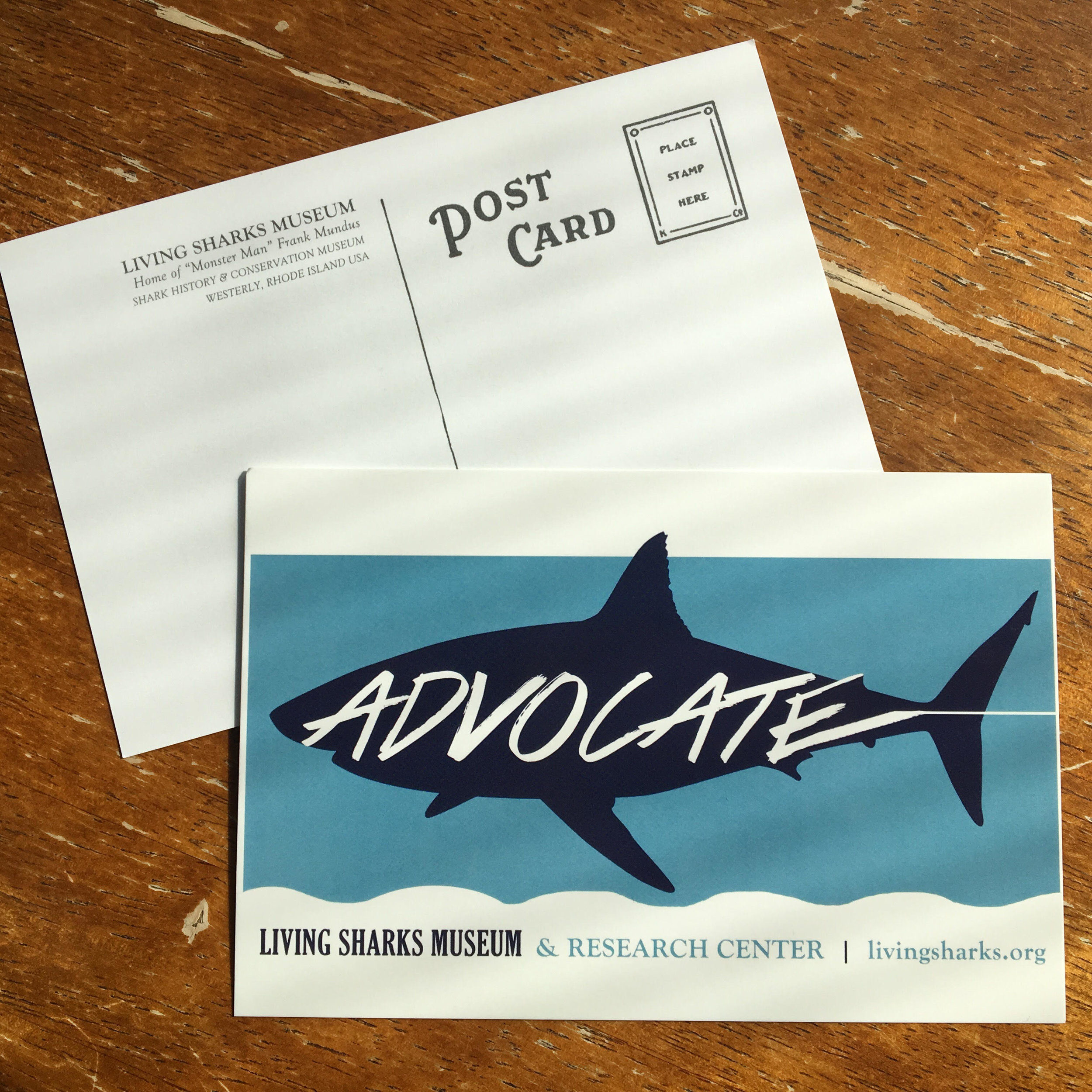 LIVING SHARKS MUSEUM POSTCARDS - Available onsite in the Living Sharks Museum!