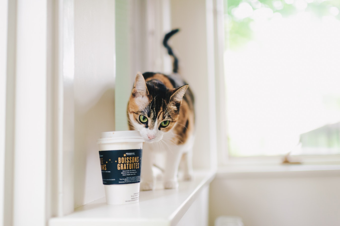 """Cat Café - Let's be honest, at Catfe Diem we're more about the cats than the cafe. Our """"catmosphere"""" provides a comfortable, home-like environment for our cats to be themselves and just be cats, giving them a better chance for adoption. All while offering self-serve coffee for humans with purchase of admission."""