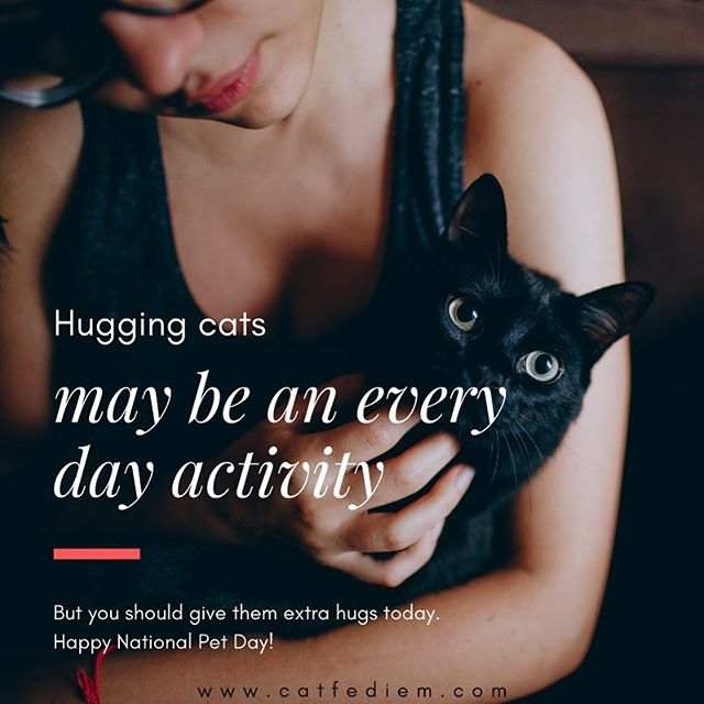 Happy #NationalPetDay! Give your furbabies a big hug today. 🤗 #hugcats #cattherapy