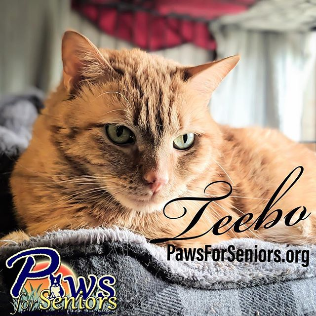 What's better than one cat? TWO!! 🐈🐈 Teebo and his friend Wickett were surrendered to the shelter at 10 years old. They have been together all their lives. Teebo is neutered, super cool, loves to be petted and adjust well to new situations. He gets along with other cats.  Wickett is a sweet 10 yr old girl, who can be shy with new situations but once she knows she is safe she is ready for love. She especially loves head rubs and chin scratches. Apply today is.gd/pawsforseniorsapp
