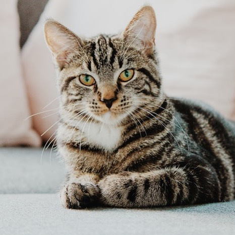 """New cat cafe in Northern Virginia coming soon! Our mission is to create a cozy """"catmosphere"""" for cats whom are otherwise shy, reserved, and often overlooked in shelters and at adoption events. Visit www.catfediem.com to learn more. #catcafe #adoptdontshop #catlovers"""