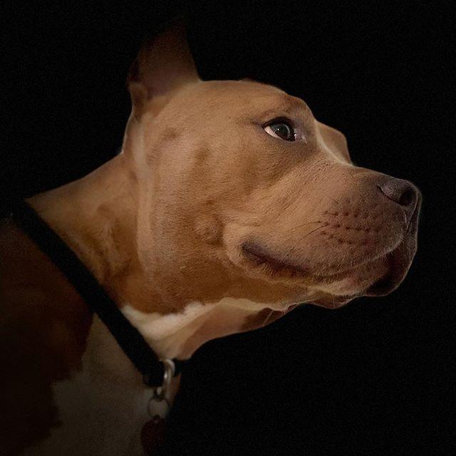 Dogboynyc