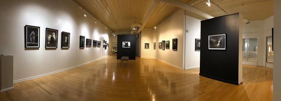 Installation View. Habitat, 2018. Donna Garcia.