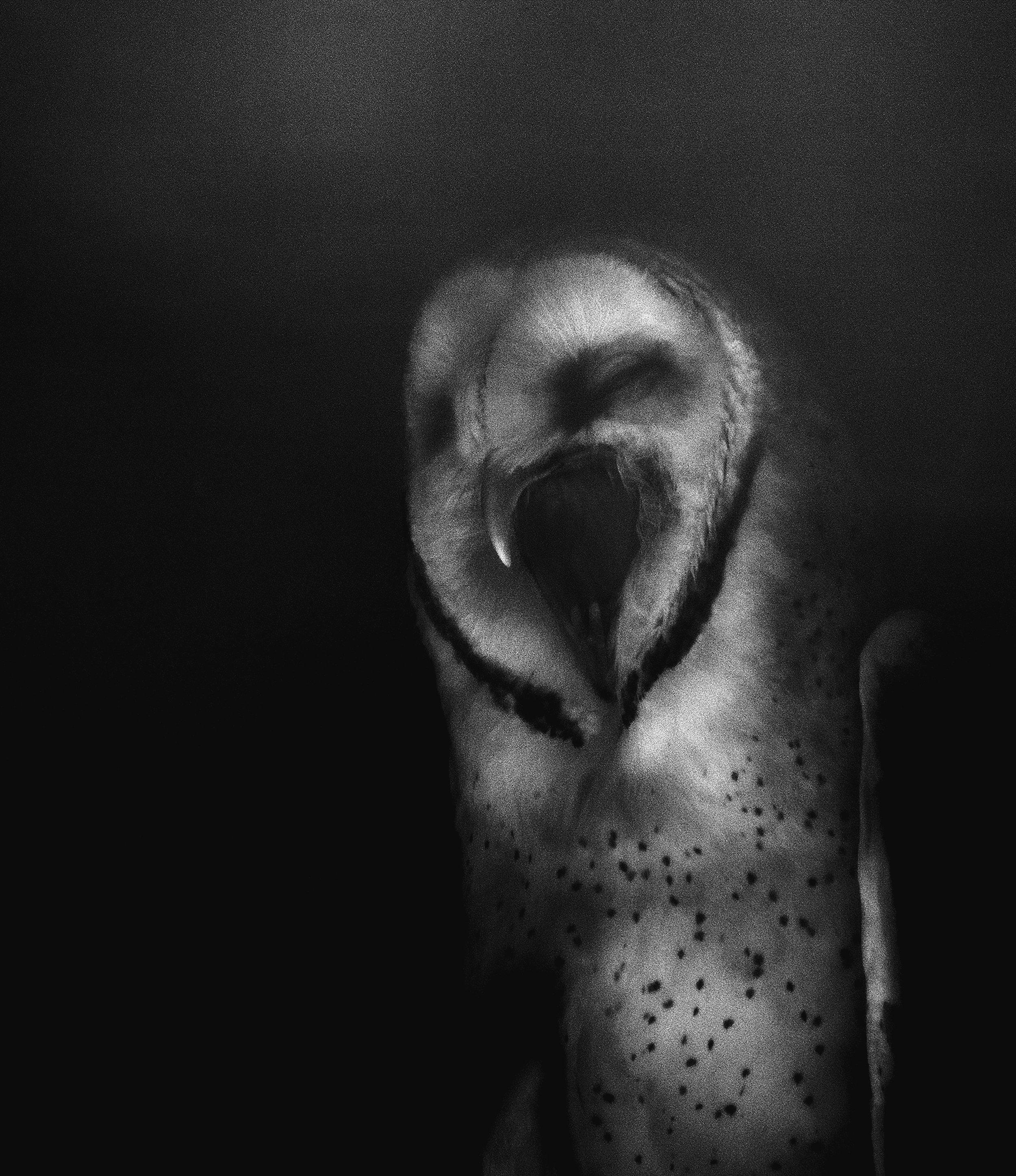 Night Owl (Windy Yawns), 2018. Donna Garcia.