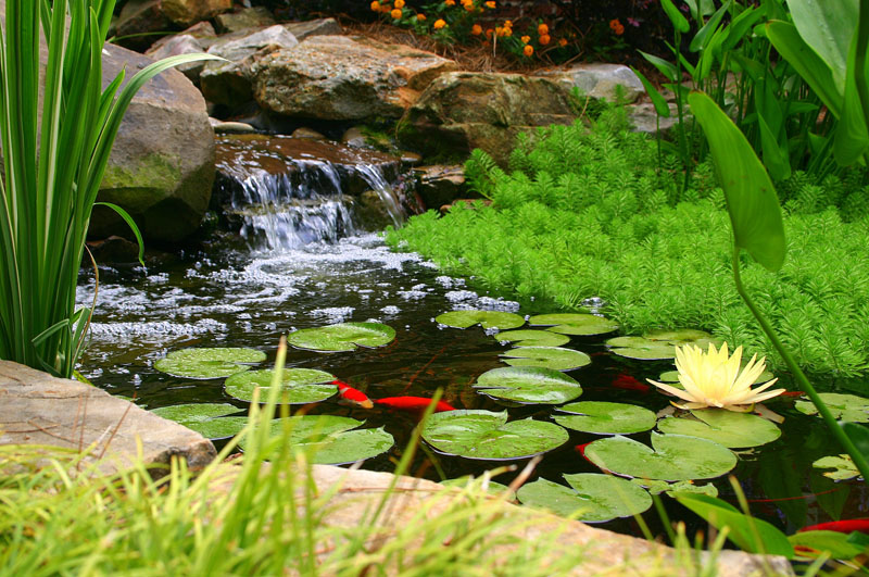 Backyard Pond Water Feature 2.jpg