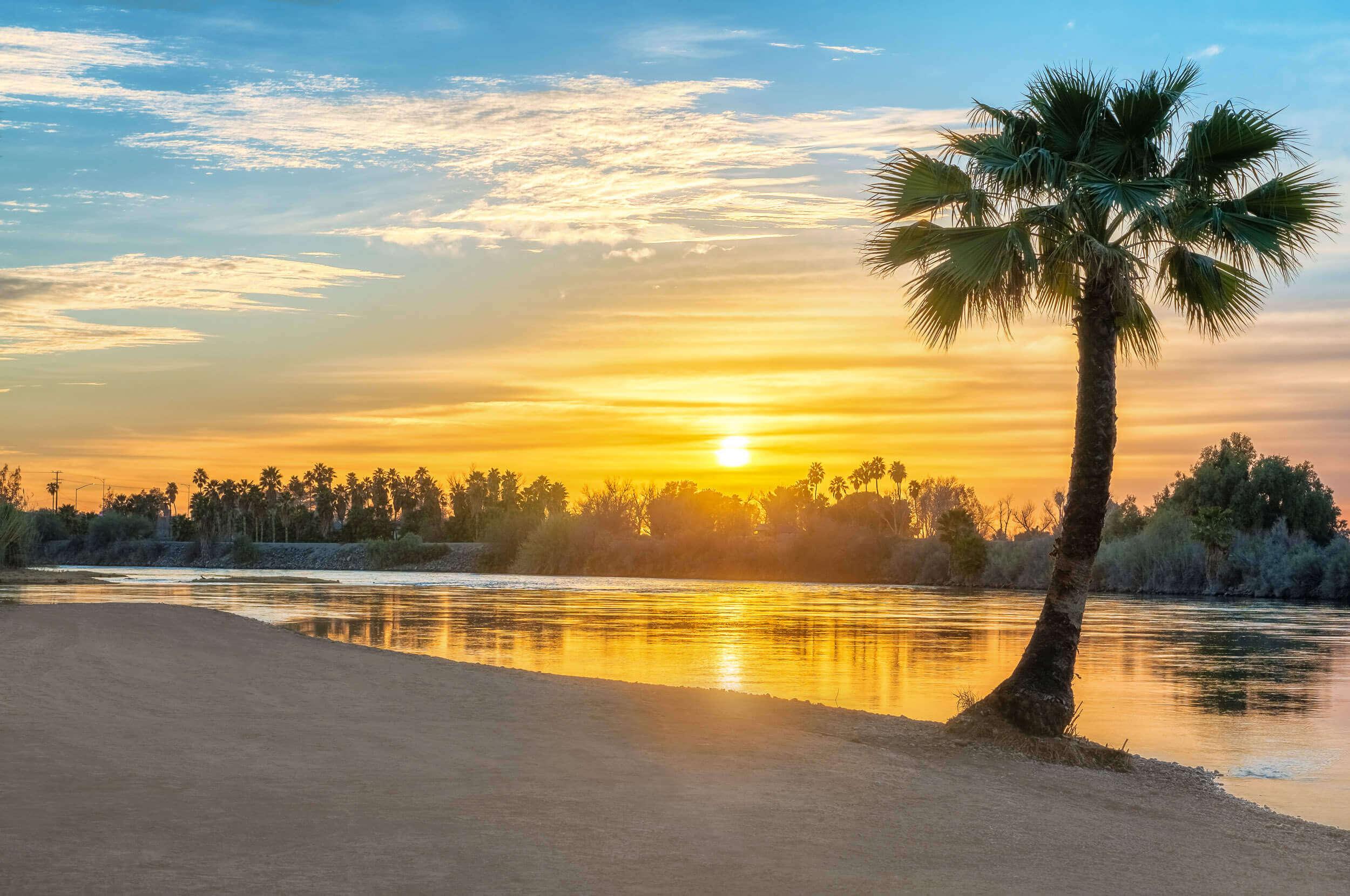 beach-palm-tree-sunset-colorado-river.jpg