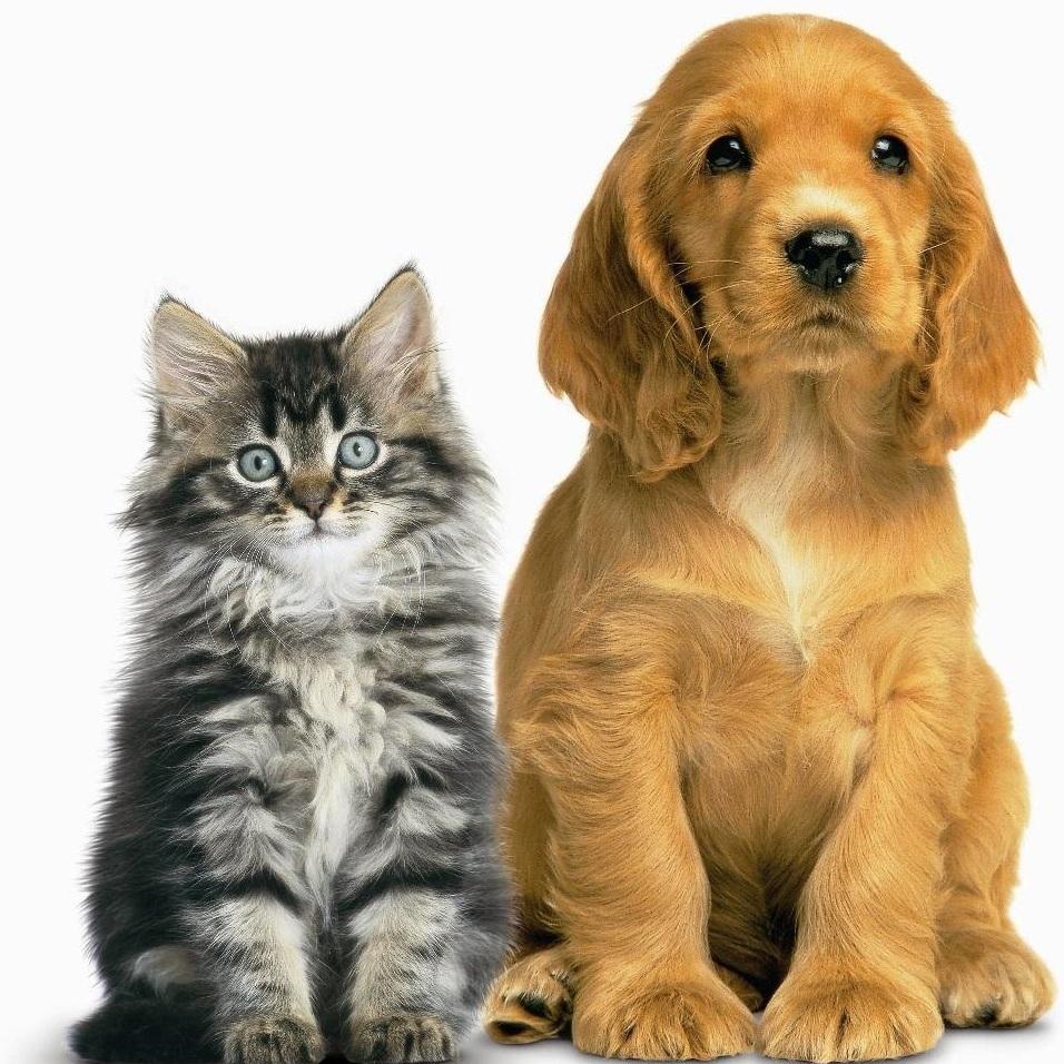 cat%2Band%2Bdog.jpg