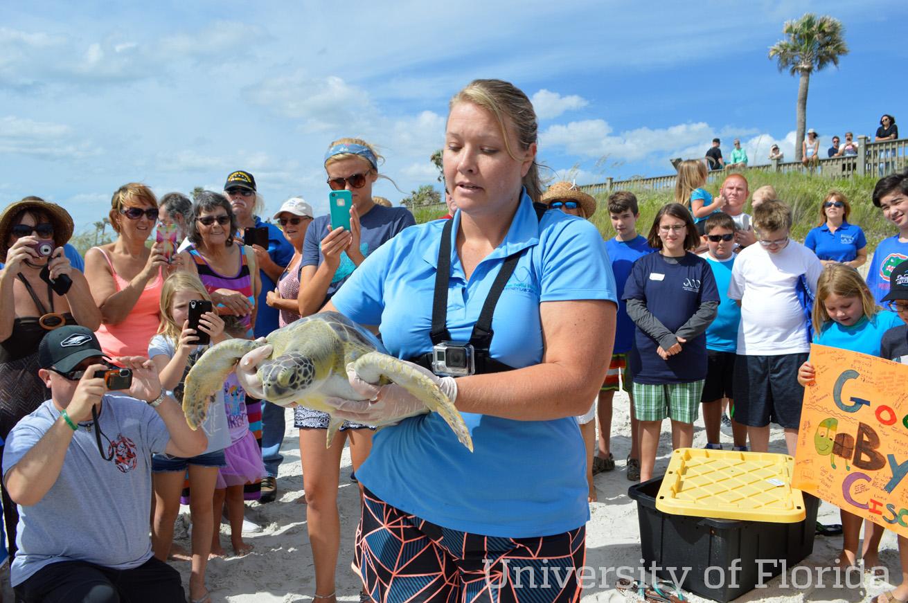 UF Sea Turtle Hospital Release wm.jpg