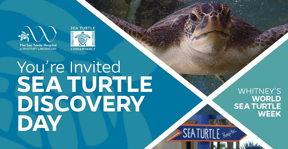 Whitney - Sea Turtle Discovery Day.jpg