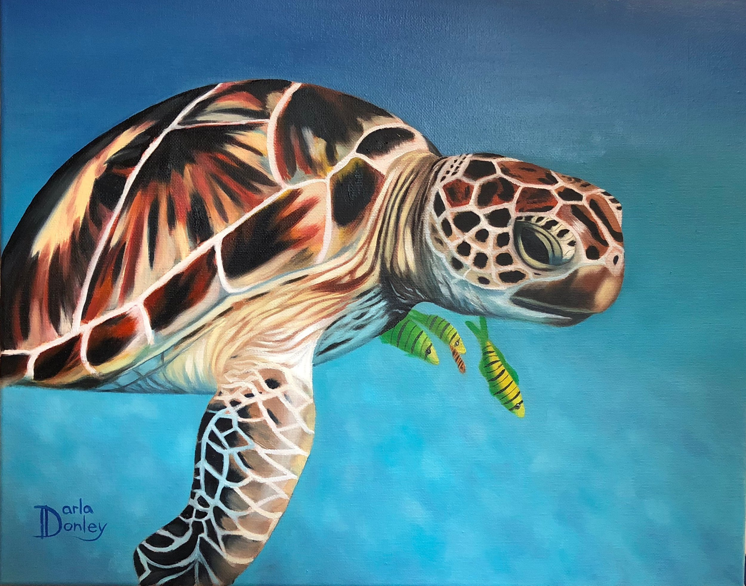 Local Sea Turtle Painting