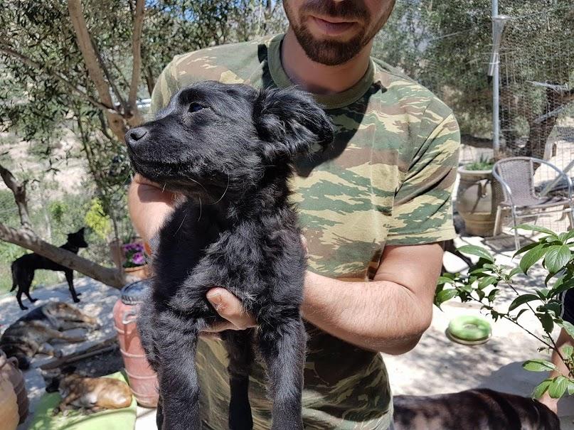 puppy in ierapetra.jpg