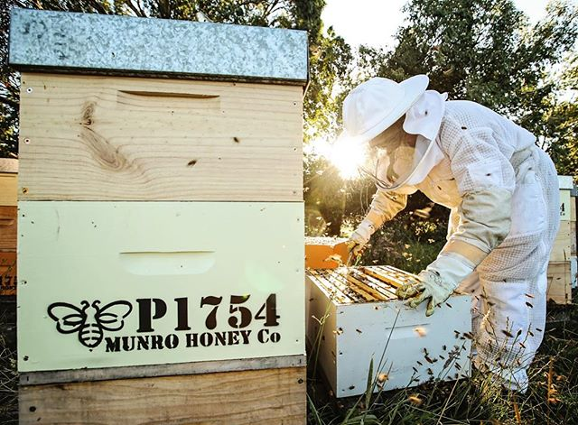 Check out the full video story on @stephmunro1 from @munrohoneyco link in bio. This lady is a superstar bee momma to 1.5 million bees.  @southlanddistrictcouncil @gwd_holden 📷@pix2envy #mysouthland