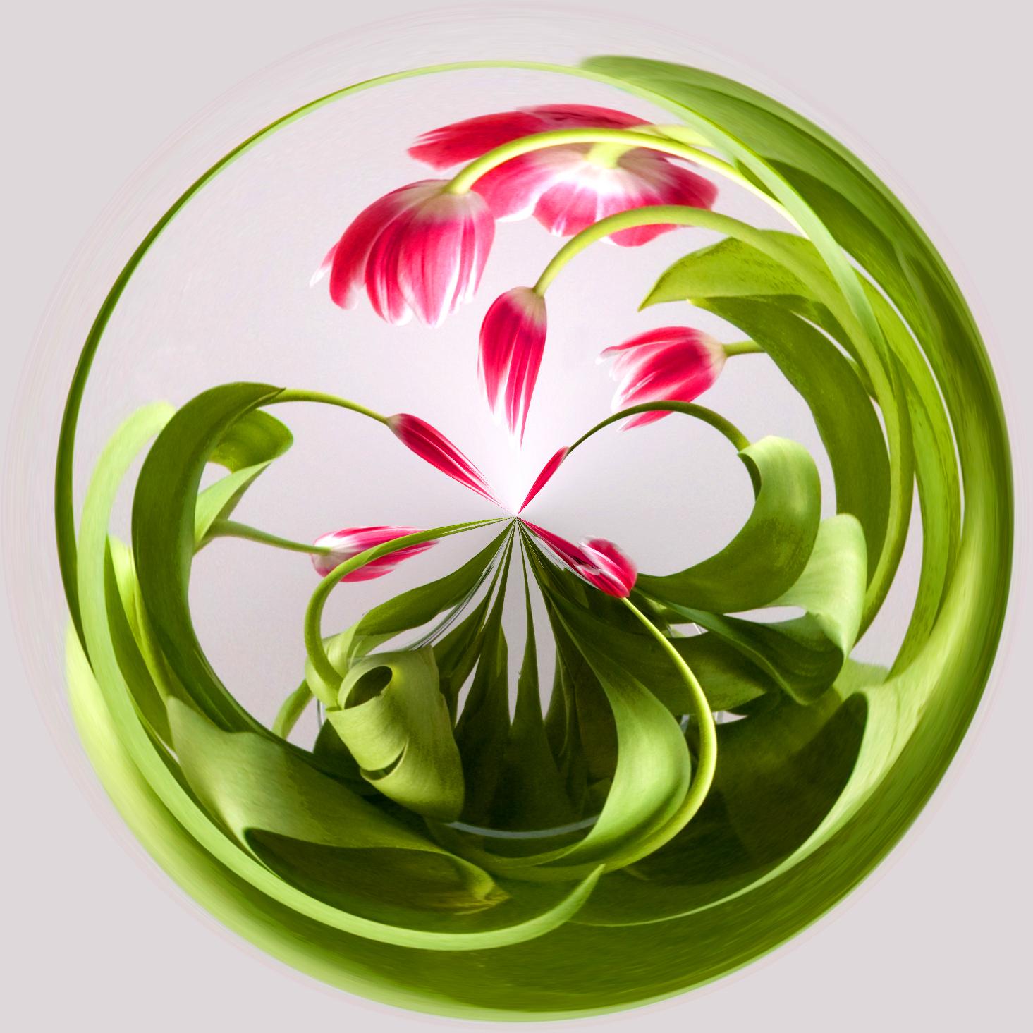 botanical2IMG_5154 tulips in vase.jpg