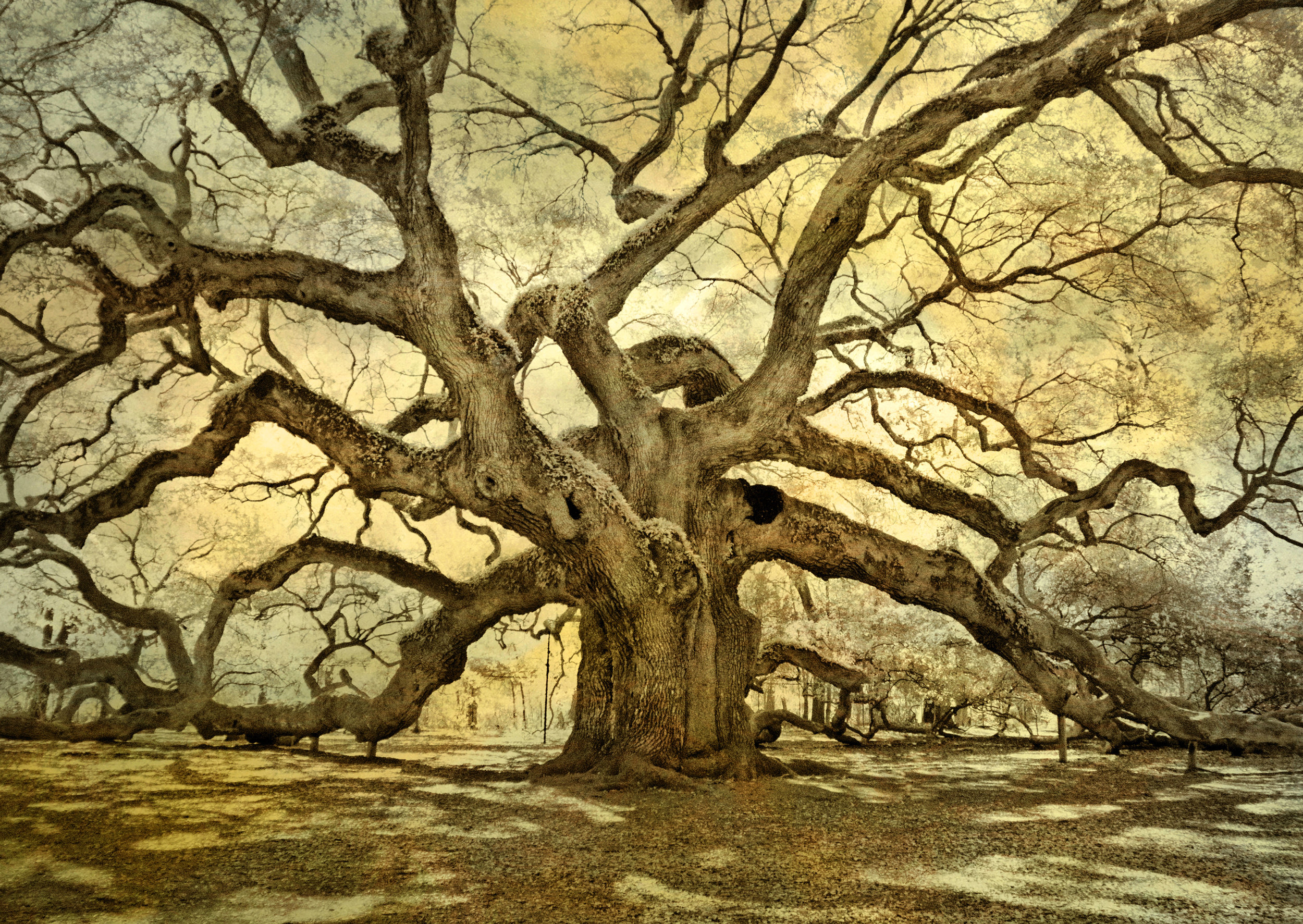 Angel Oak texture.jpg