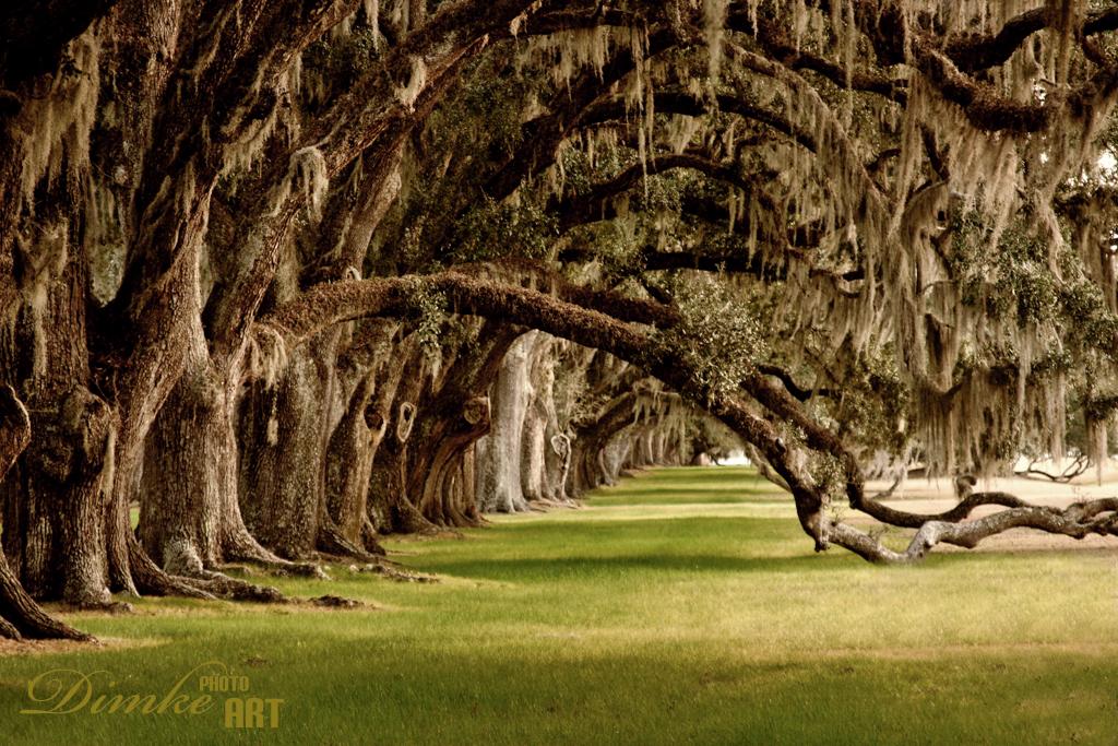 Tomotley Oaks.jpg