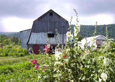 NOFA-NY certified farm in Avoca, NY, where Omyst is made.