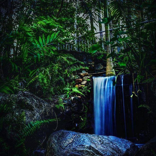Mackay Botanical Gardens.  Photo credit via IG: @deeeaye