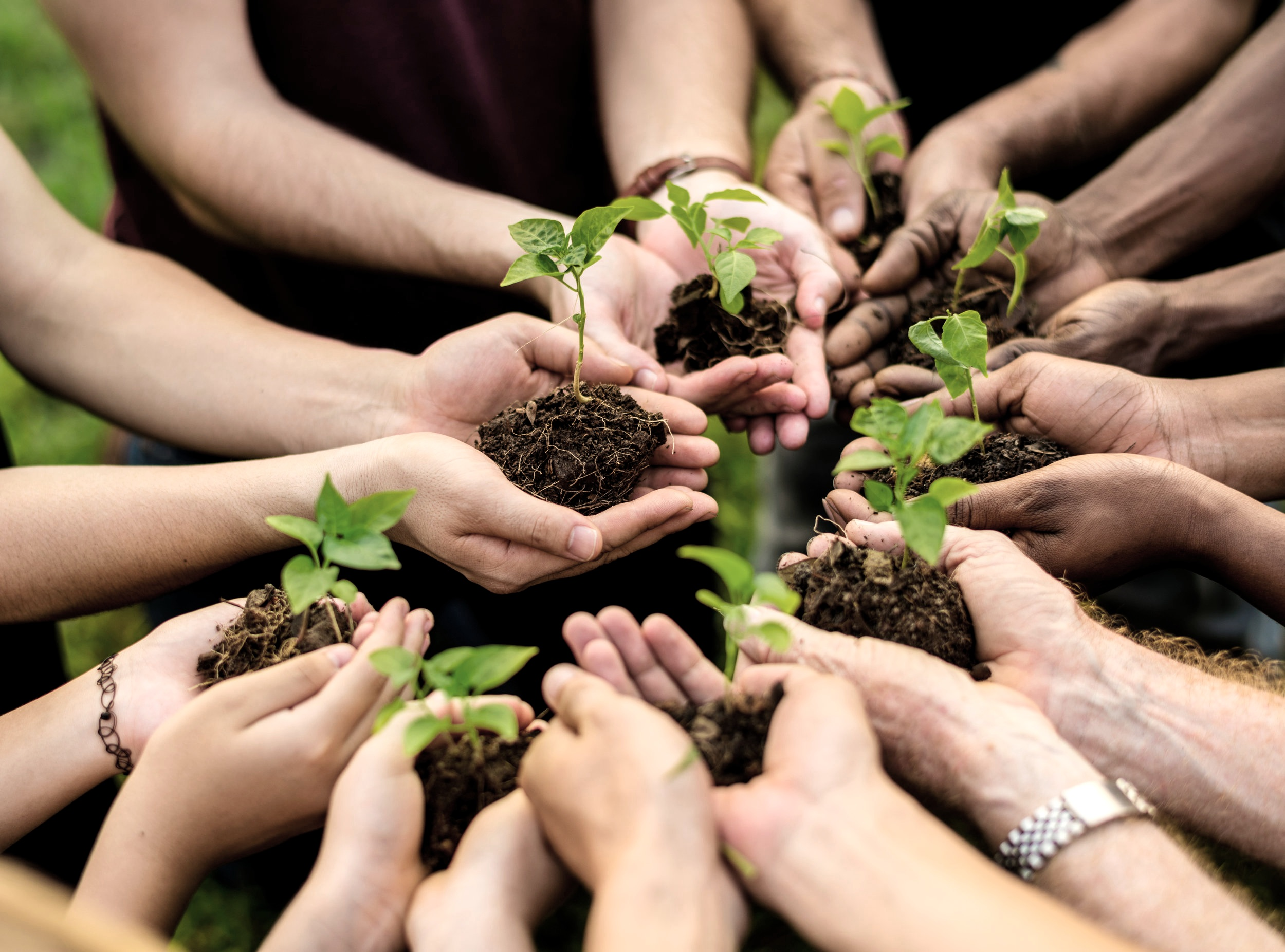 environmental nonprofits organizations | Green Dreamer Podcast on Sustainability and Regeneration