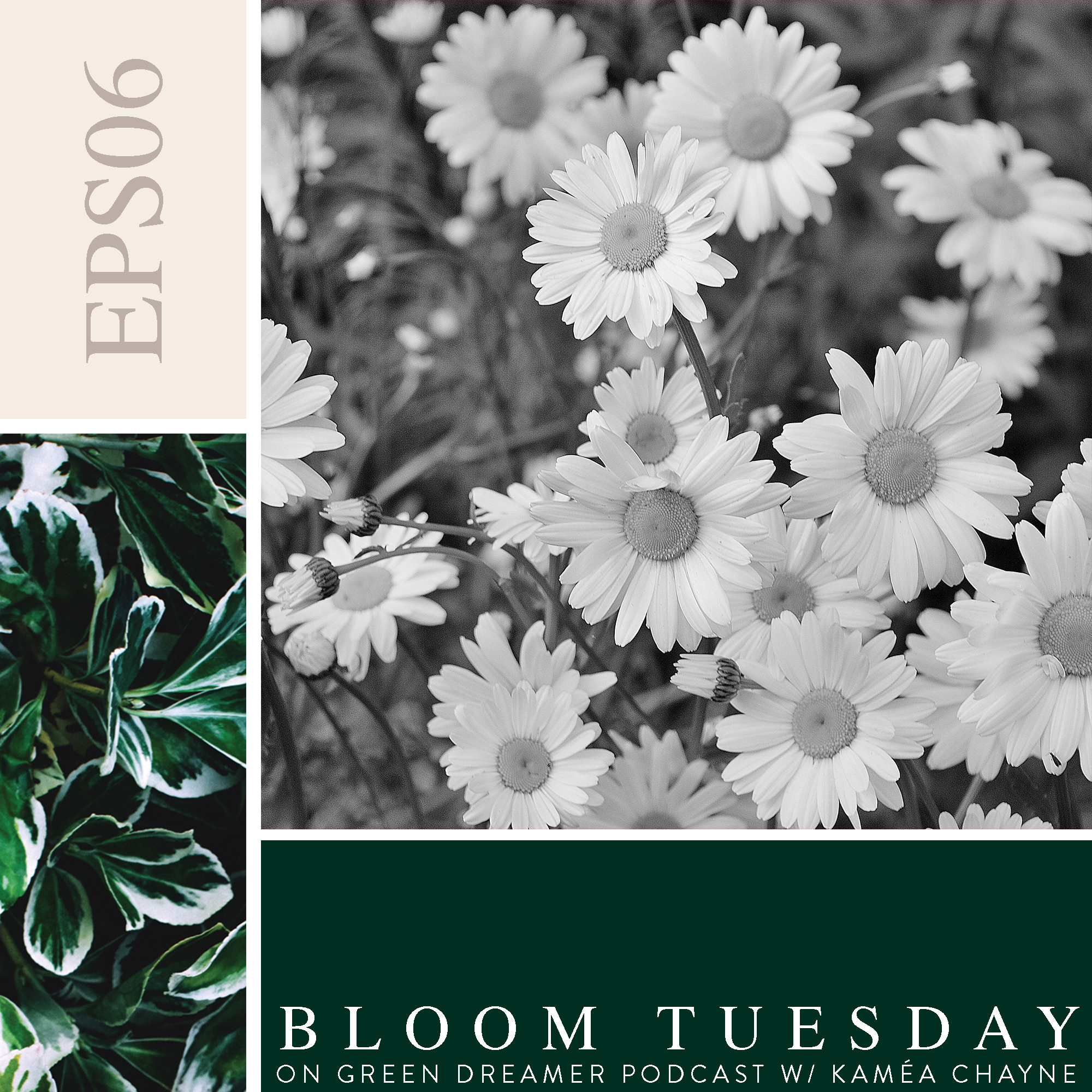 06) BLOOM TUESDAY