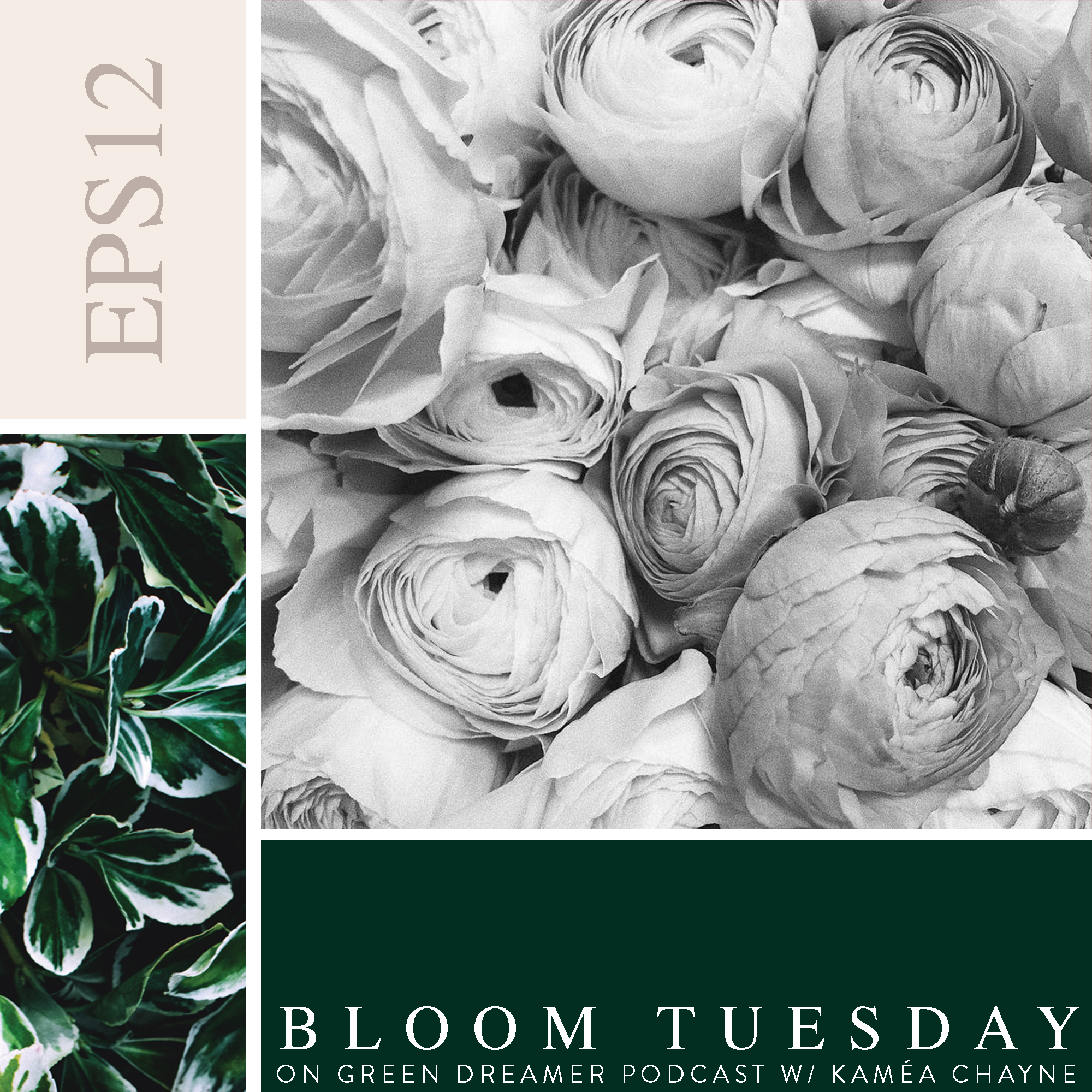 12) BLOOM TUESDAY