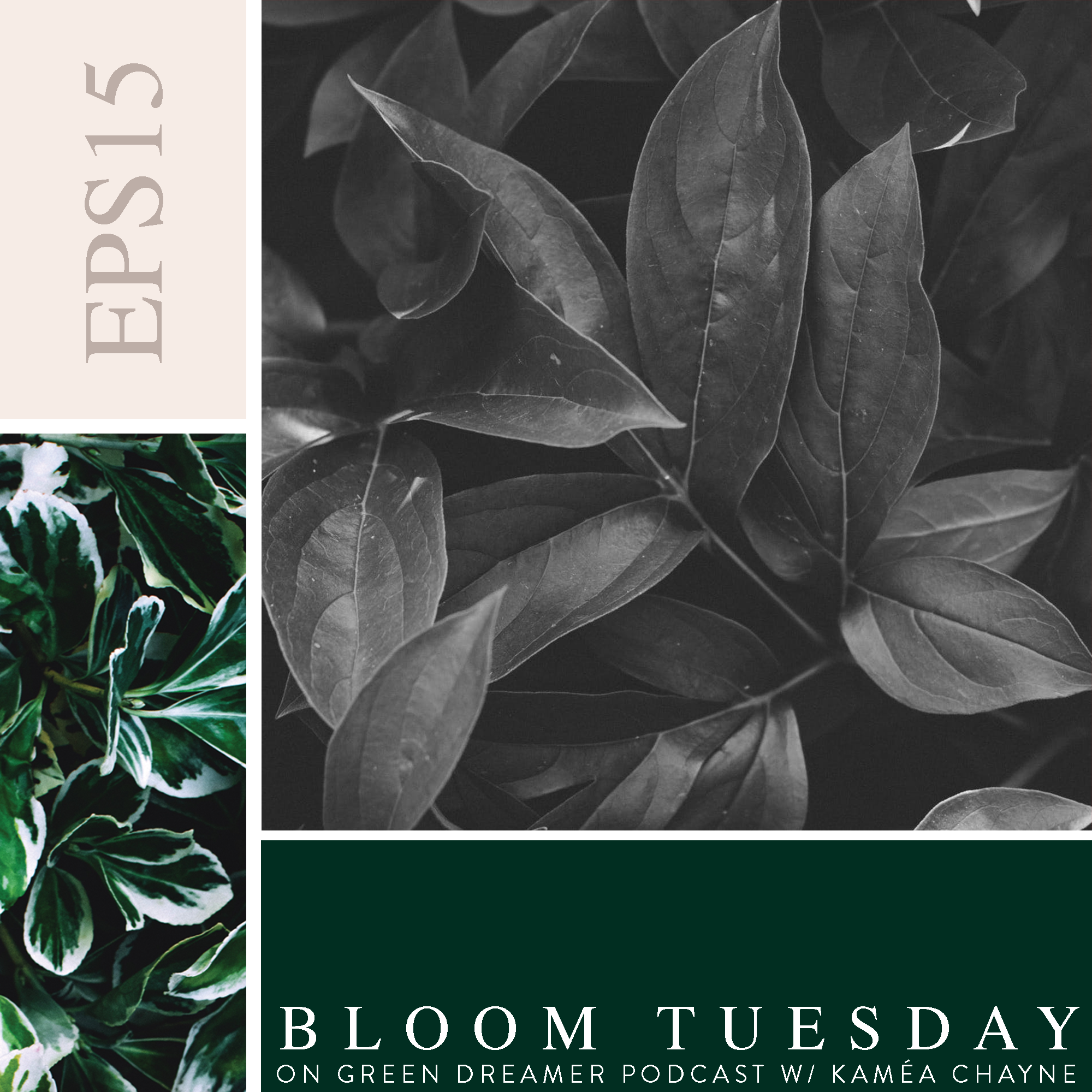 15) BLOOM TUESDAY