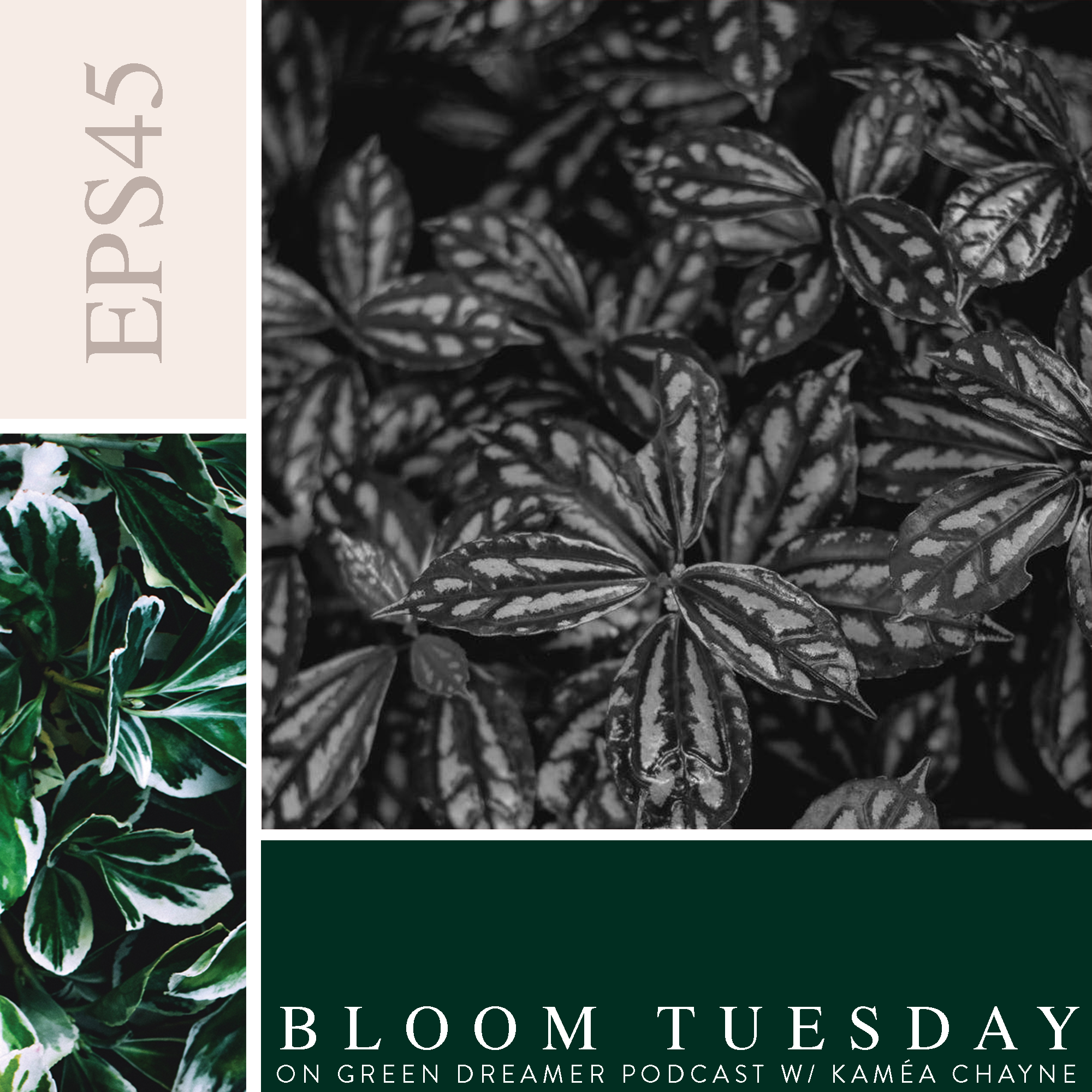 45) BLOOM TUESDAY