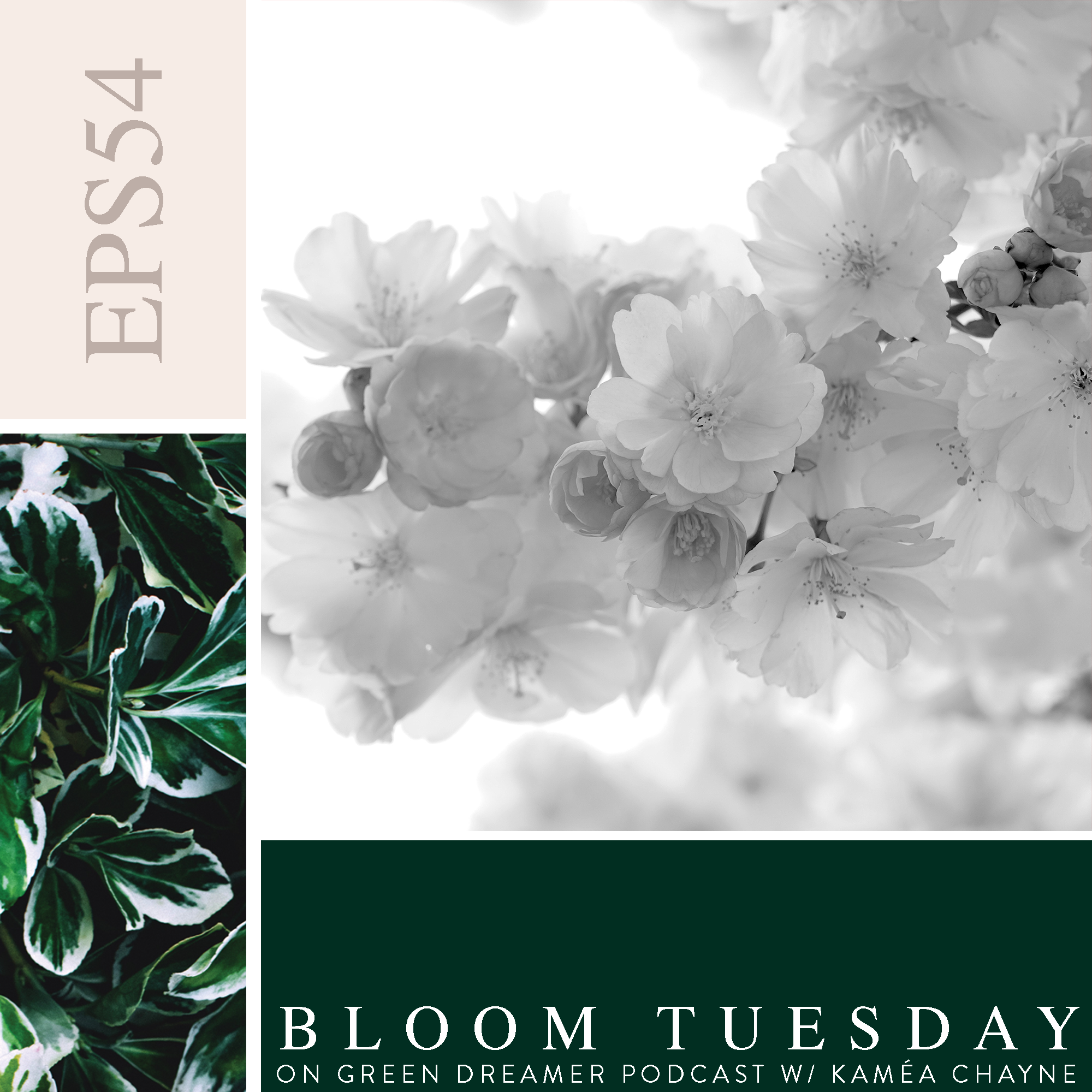 54) BLOOM TUESDAY